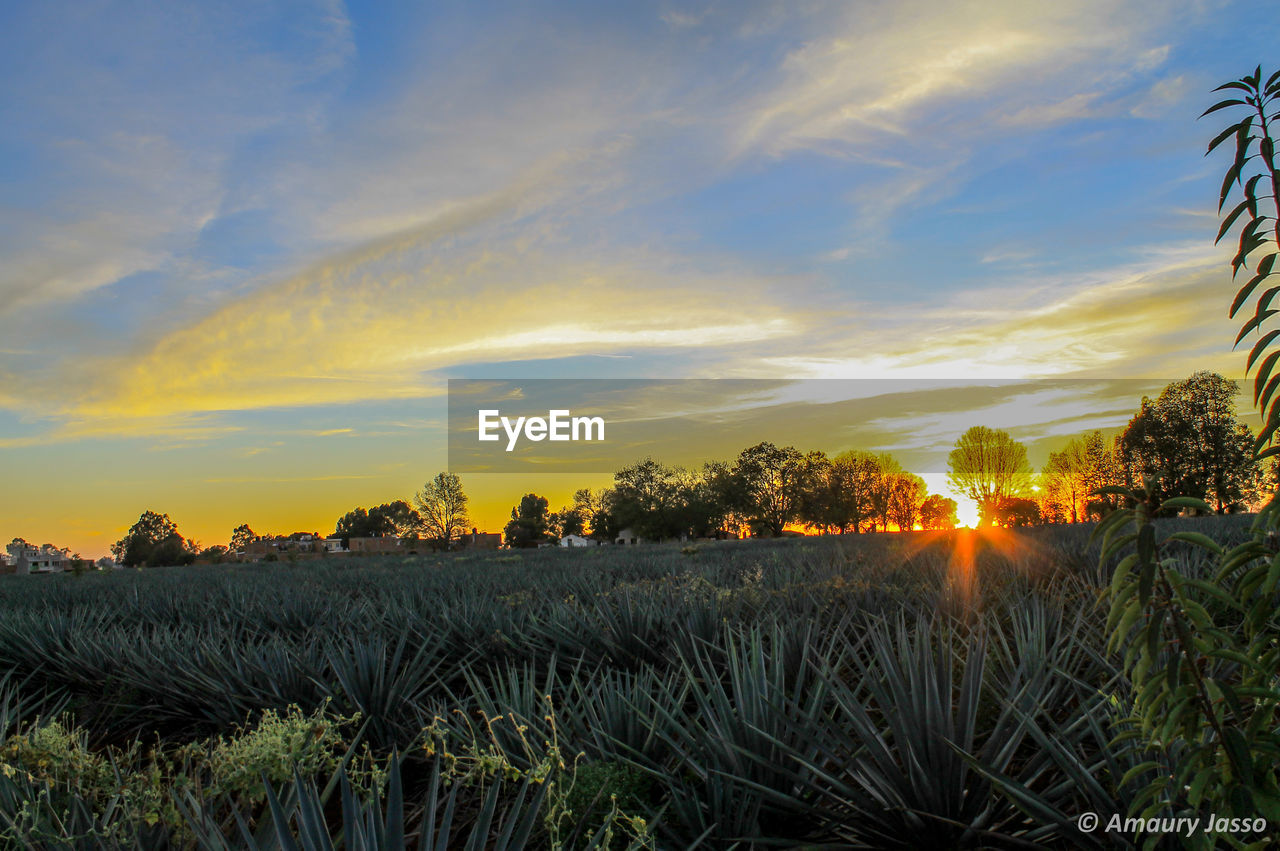 sunset, nature, tranquil scene, tranquility, scenics, sky, beauty in nature, growth, outdoors, no people, field, cloud - sky, plant, grass, landscape, water, day, tree