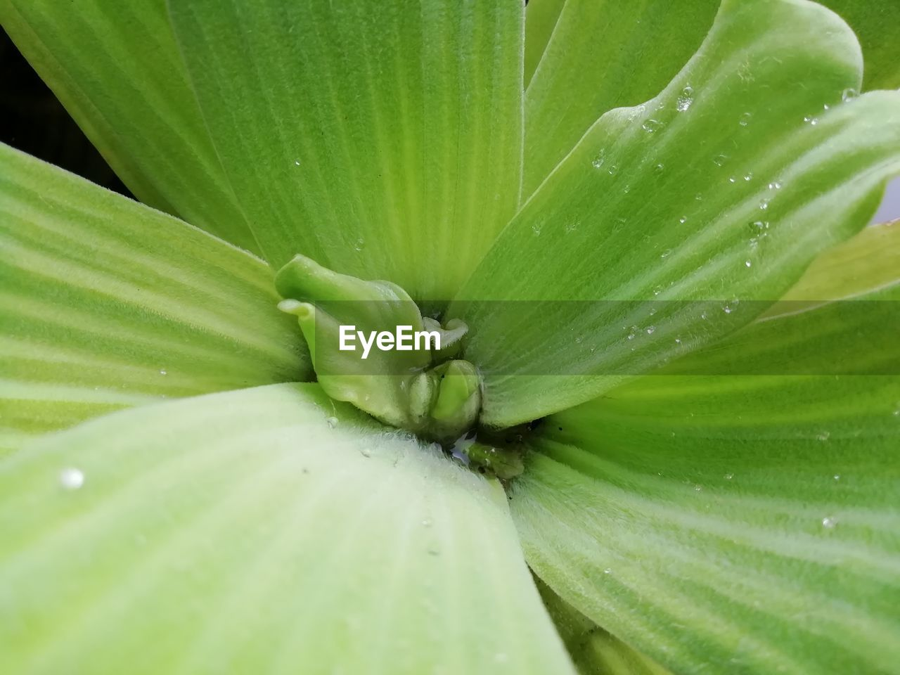 green color, close-up, freshness, growth, full frame, no people, plant, beauty in nature, leaf, backgrounds, plant part, nature, flower, drop, day, outdoors, water, flowering plant, macro, natural pattern, leaves, purity