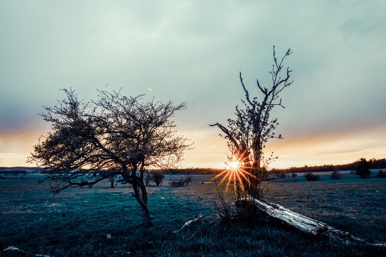 sky, tree, plant, beauty in nature, sunset, tranquility, scenics - nature, nature, cloud - sky, tranquil scene, bare tree, winter, field, no people, water, non-urban scene, land, snow, outdoors, dead plant