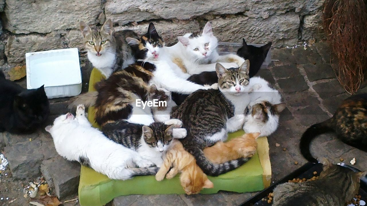 cat, feline, domestic cat, mammal, group of animals, pets, domestic, animal themes, animal, vertebrate, domestic animals, relaxation, no people, high angle view, sitting, young animal, nature, day, togetherness, two animals, animal family, whisker