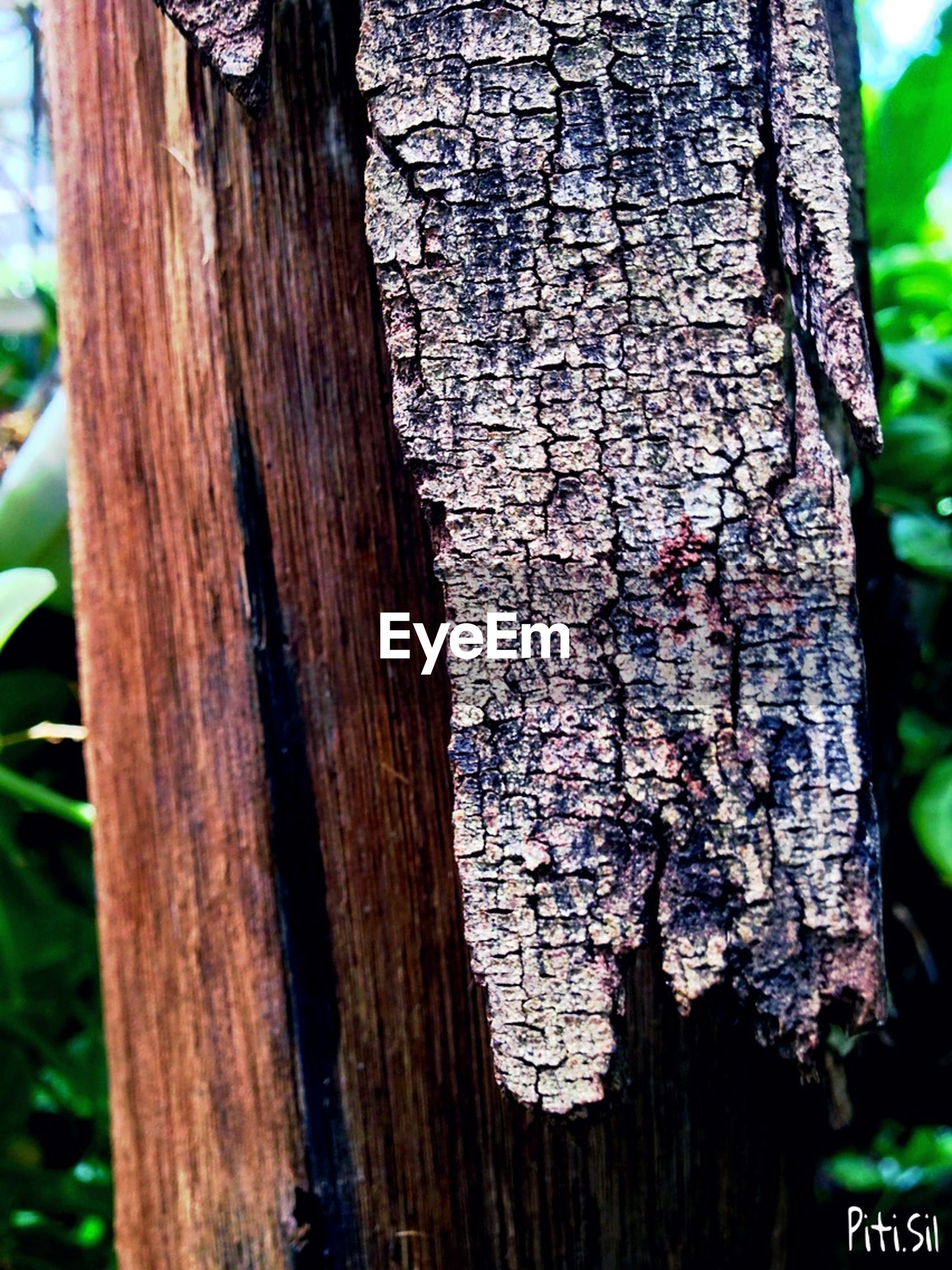 tree trunk, close-up, wood - material, textured, tree, focus on foreground, bark, wooden, wood, growth, day, pattern, outdoors, rough, no people, nature, weathered, plant bark, old, part of