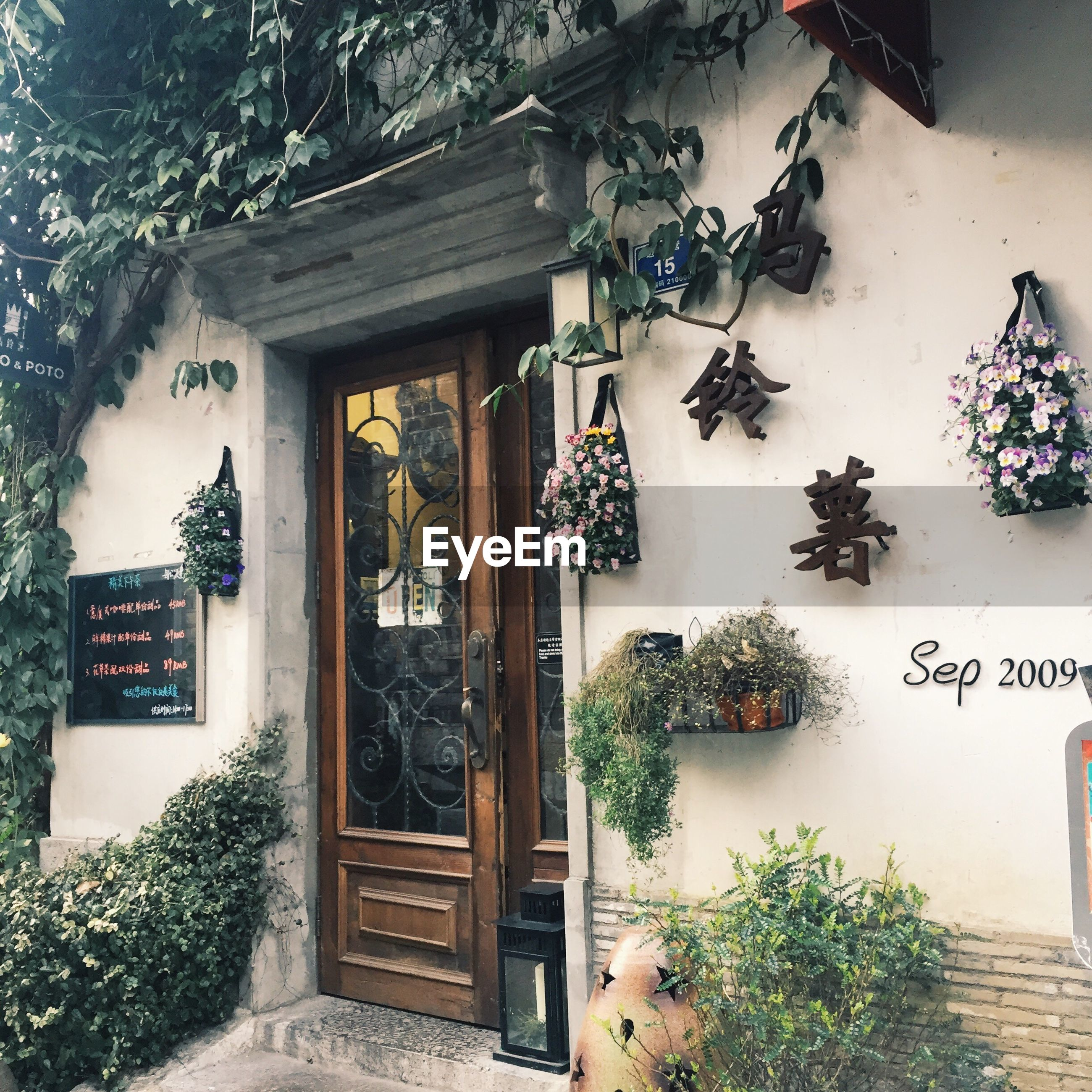 tree, plant, no people, window, christmas tree, christmas decoration, christmas, ivy, growth, day, building exterior, nature, creeper plant, outdoors, architecture, christmas ornament