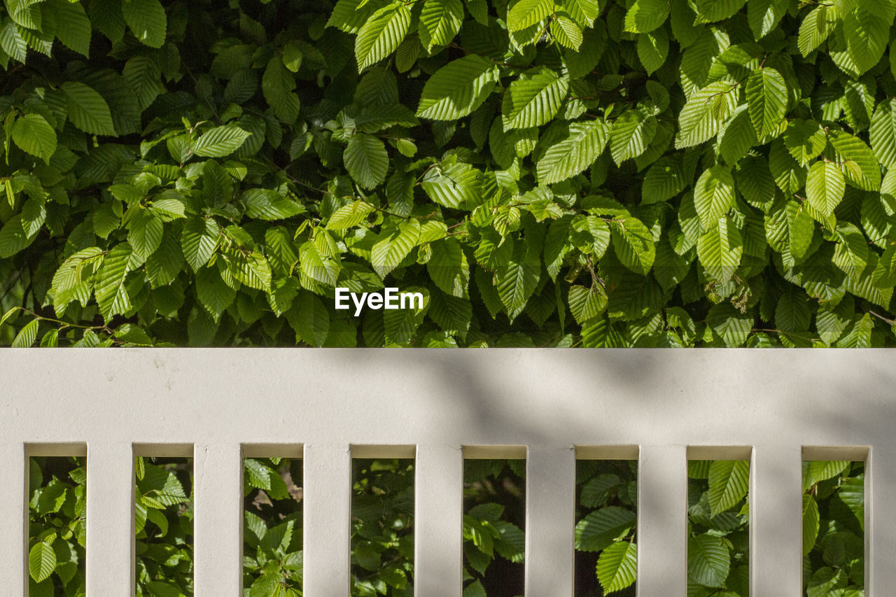 green color, plant, growth, no people, day, barrier, fence, boundary, nature, outdoors, plant part, leaf, close-up, beauty in nature, security, railing, field, safety, protection, full frame, hedge
