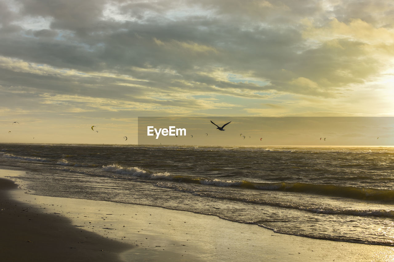 sky, sea, water, beach, land, sunset, scenics - nature, cloud - sky, beauty in nature, nature, tranquility, tranquil scene, animal, animal themes, vertebrate, sand, bird, animals in the wild, animal wildlife, horizon over water, no people, outdoors