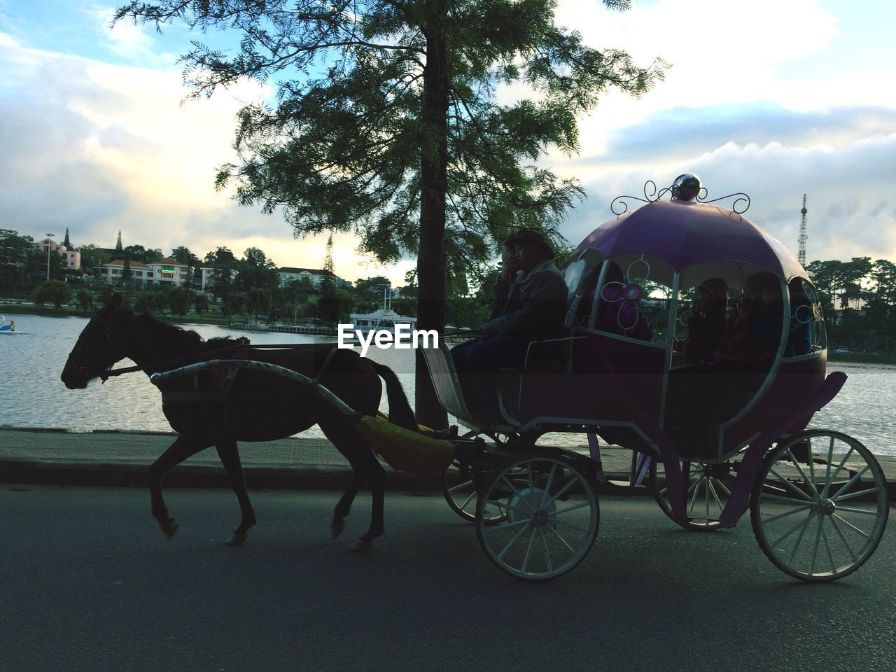 horse, horse cart, transportation, horsedrawn, domestic animals, carriage, tree, mode of transport, sky, one animal, animal themes, mammal, cloud - sky, outdoors, land vehicle, day, no people, nature