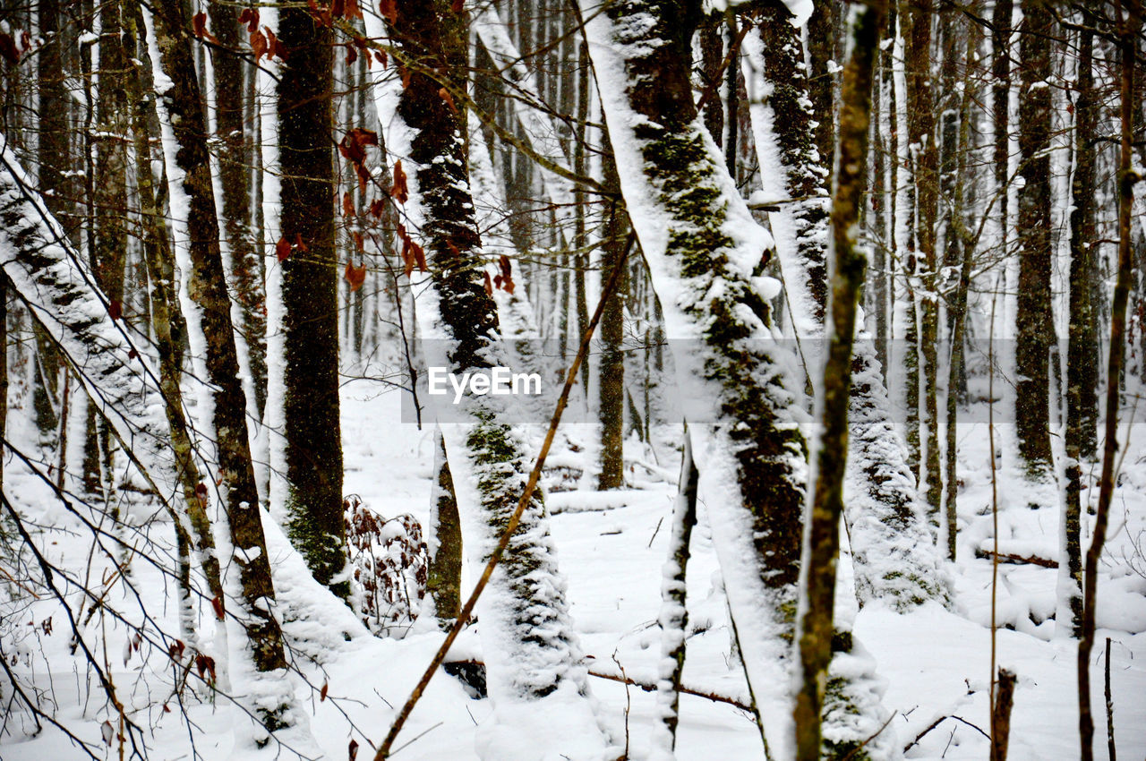 cold temperature, snow, forest, nature, winter, tree, white color, scenics, tranquil scene, landscape, no people, outdoors, mountain, day, beauty in nature, snowing, tree trunk, bare tree, sky, freshness