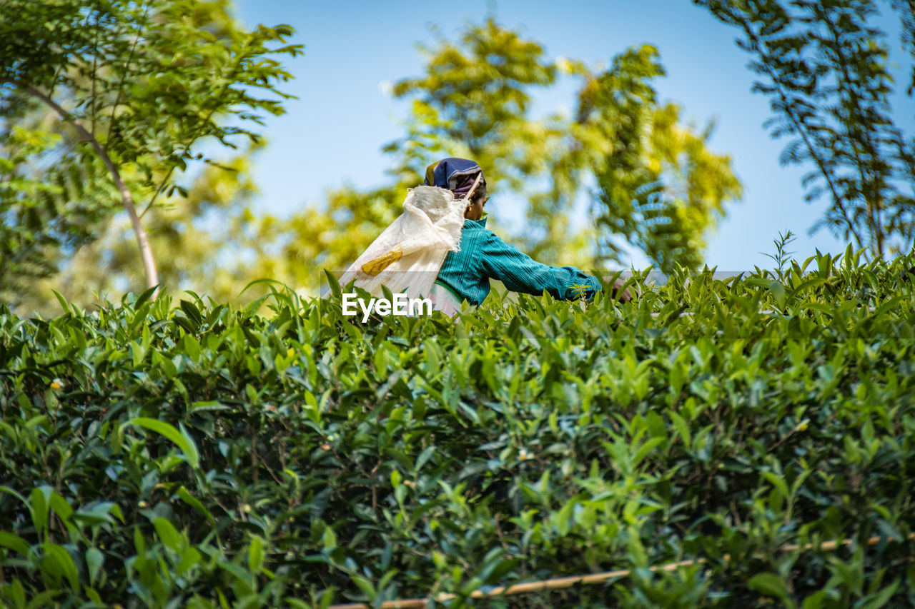 LOW ANGLE VIEW OF BIRD ON TREE AGAINST SKY