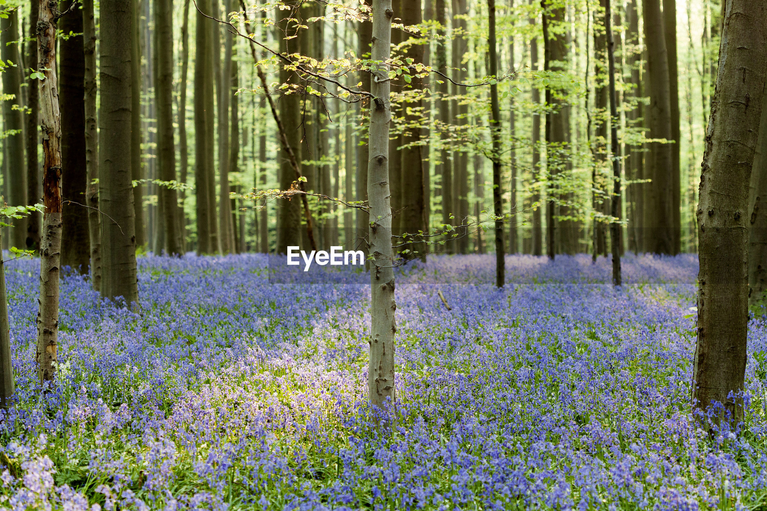 PANORAMIC VIEW OF FLOWER PLANTS IN FOREST