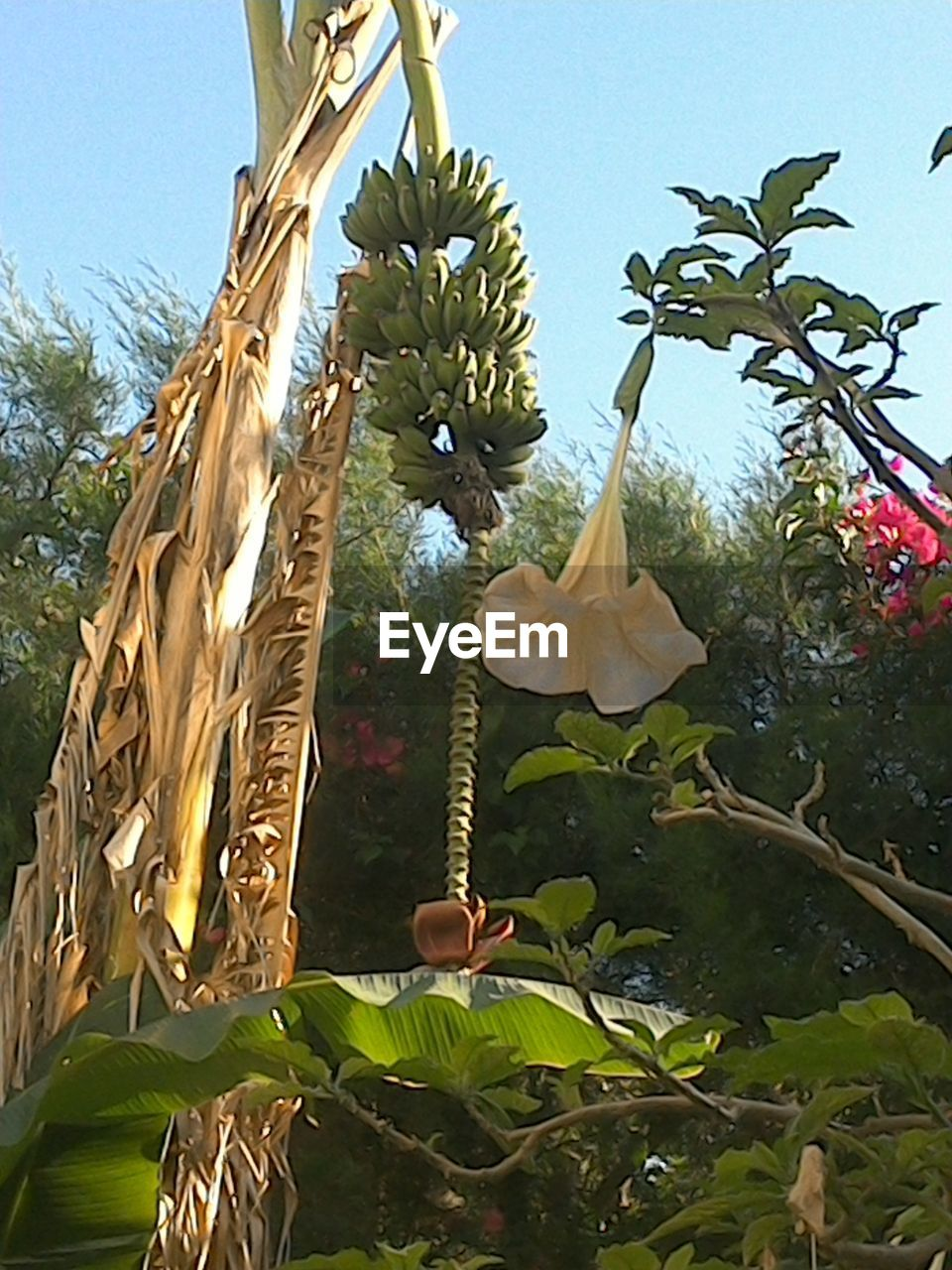 leaf, growth, tree, low angle view, day, nature, plant, banana tree, no people, beauty in nature, flower, outdoors, green color, branch, close-up, freshness, sky