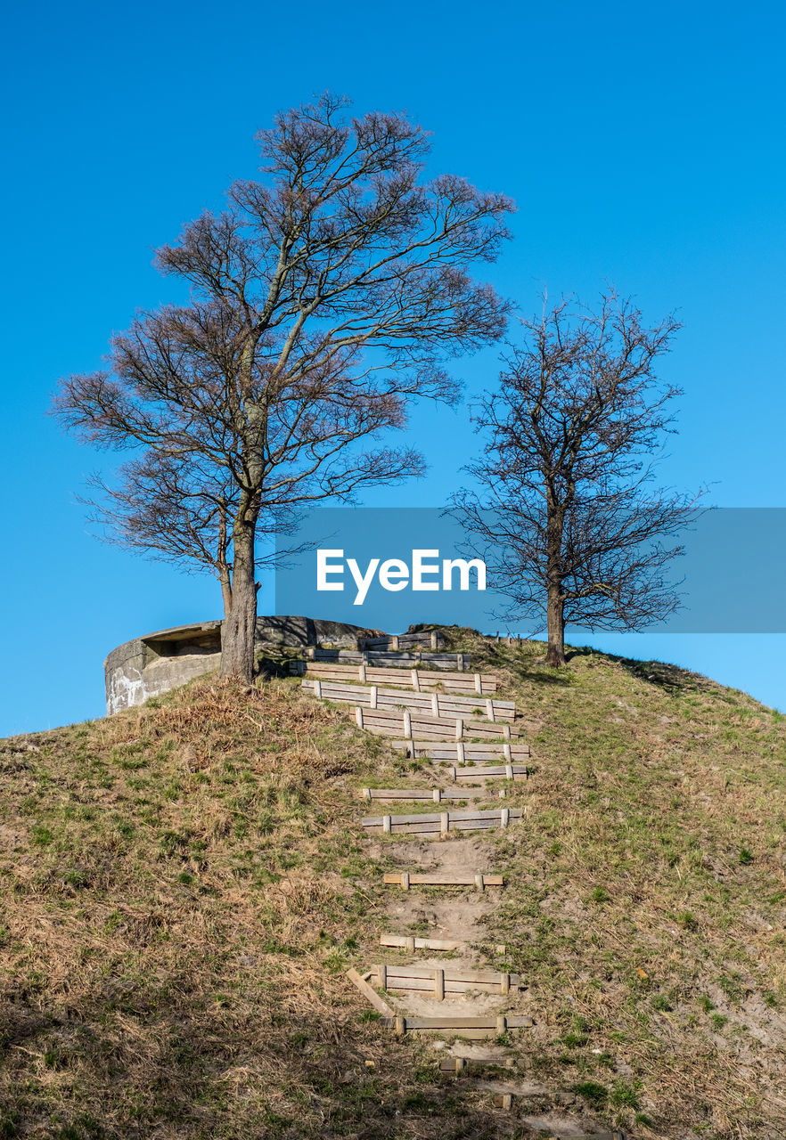 tree, old ruin, day, history, built structure, clear sky, no people, bare tree, nature, architecture, outdoors, blue, building exterior, sky, scenics, grass, beauty in nature, landscape, ancient civilization