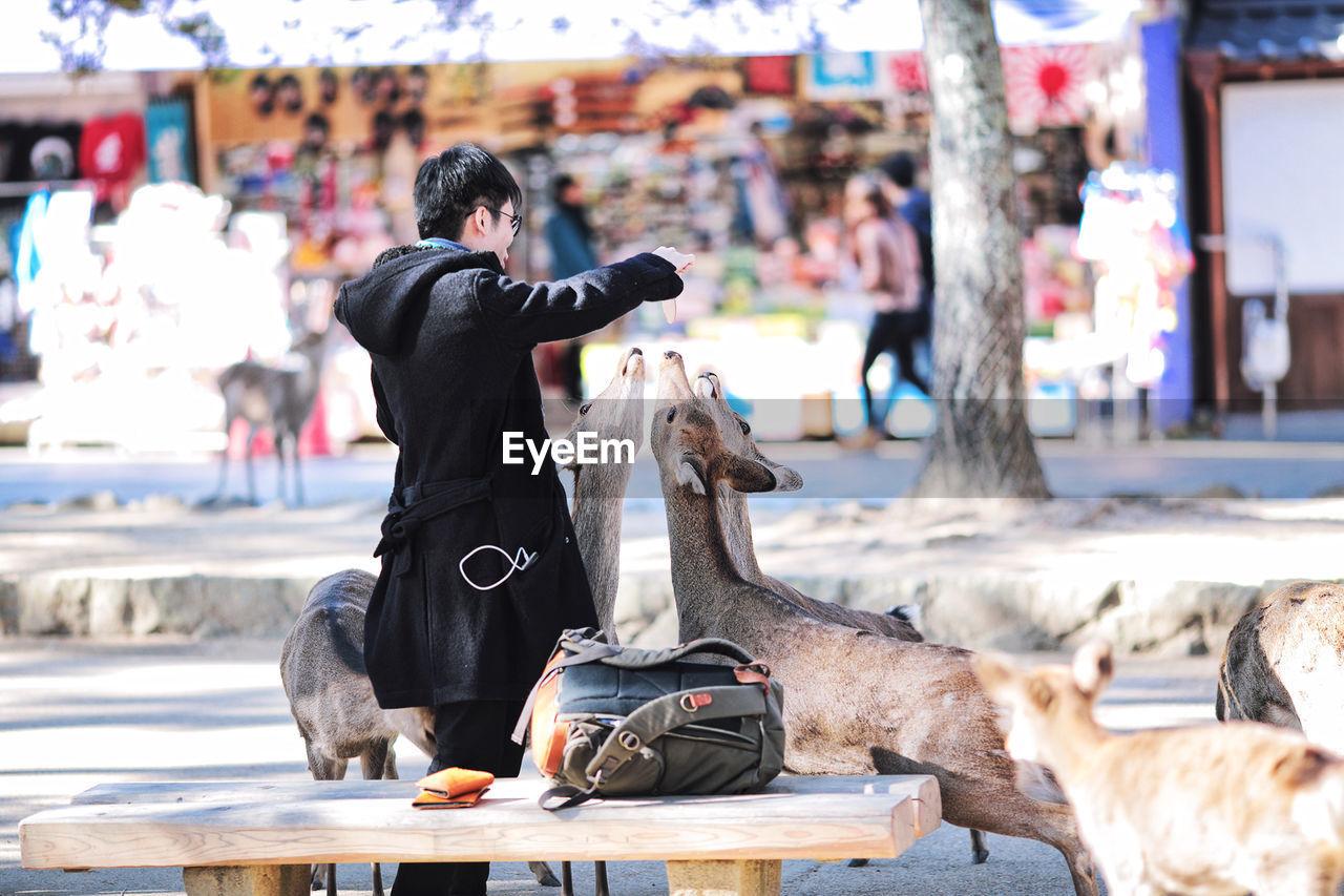 Man Feeding Deers In City