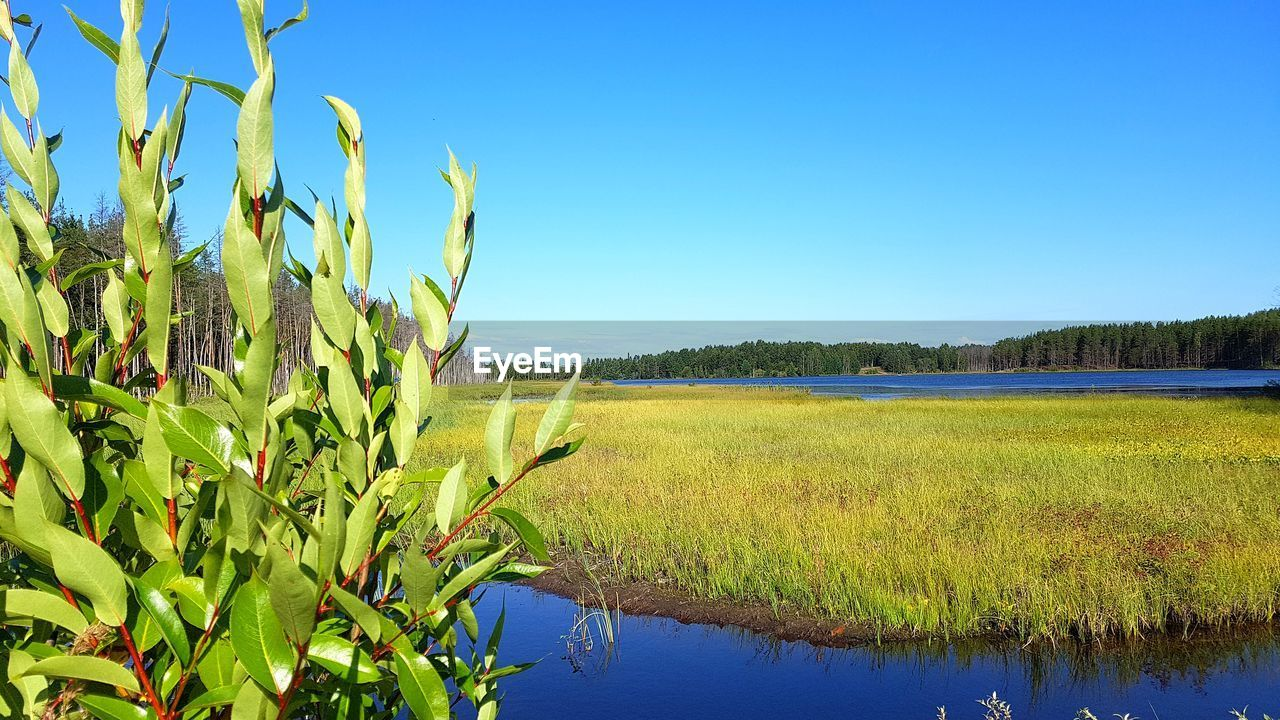 plant, sky, growth, field, beauty in nature, landscape, tranquility, clear sky, scenics - nature, nature, blue, tranquil scene, land, agriculture, day, environment, green color, no people, water, rural scene, outdoors