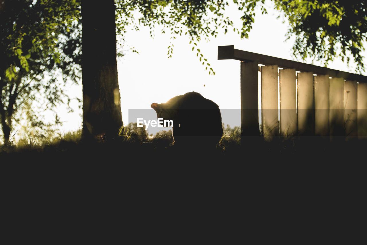 animal themes, mammal, animal, vertebrate, one animal, domestic animals, domestic, pets, plant, tree, animal wildlife, no people, nature, sky, silhouette, livestock, cattle, day, field, animals in the wild, outdoors, herbivorous, animal head