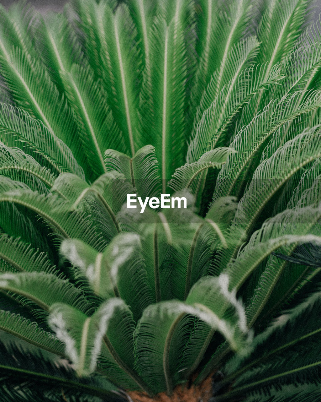 leaf, plant part, growth, plant, green color, nature, no people, palm tree, palm leaf, frond, beauty in nature, close-up, backgrounds, tropical climate, fern, full frame, day, outdoors, tree, environment, rainforest, tropical tree