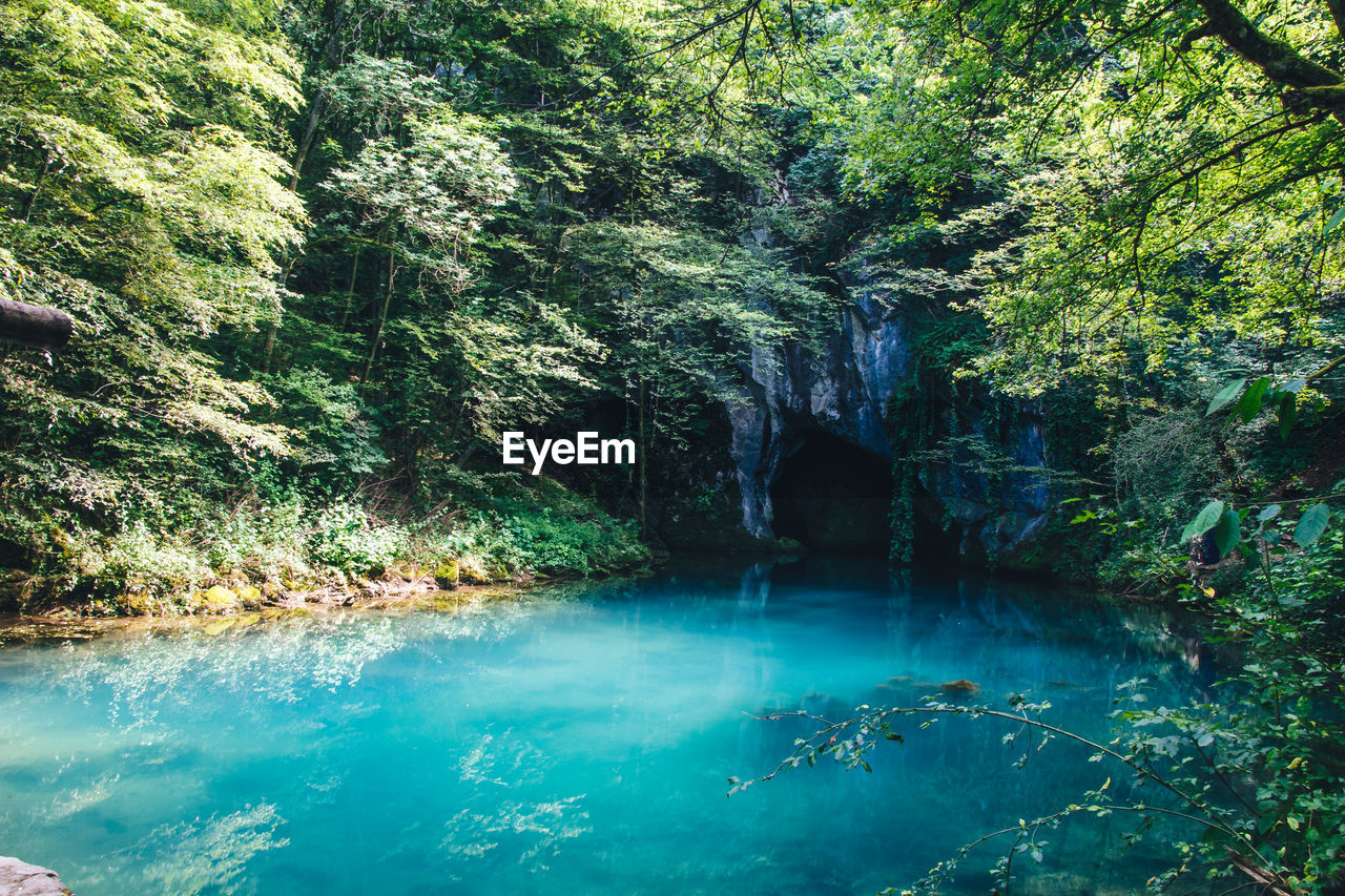 water, tree, beauty in nature, plant, scenics - nature, rock, forest, tranquility, nature, rock - object, solid, land, no people, tranquil scene, day, waterfront, non-urban scene, rock formation, growth, outdoors, flowing water, flowing, rainforest, turquoise colored