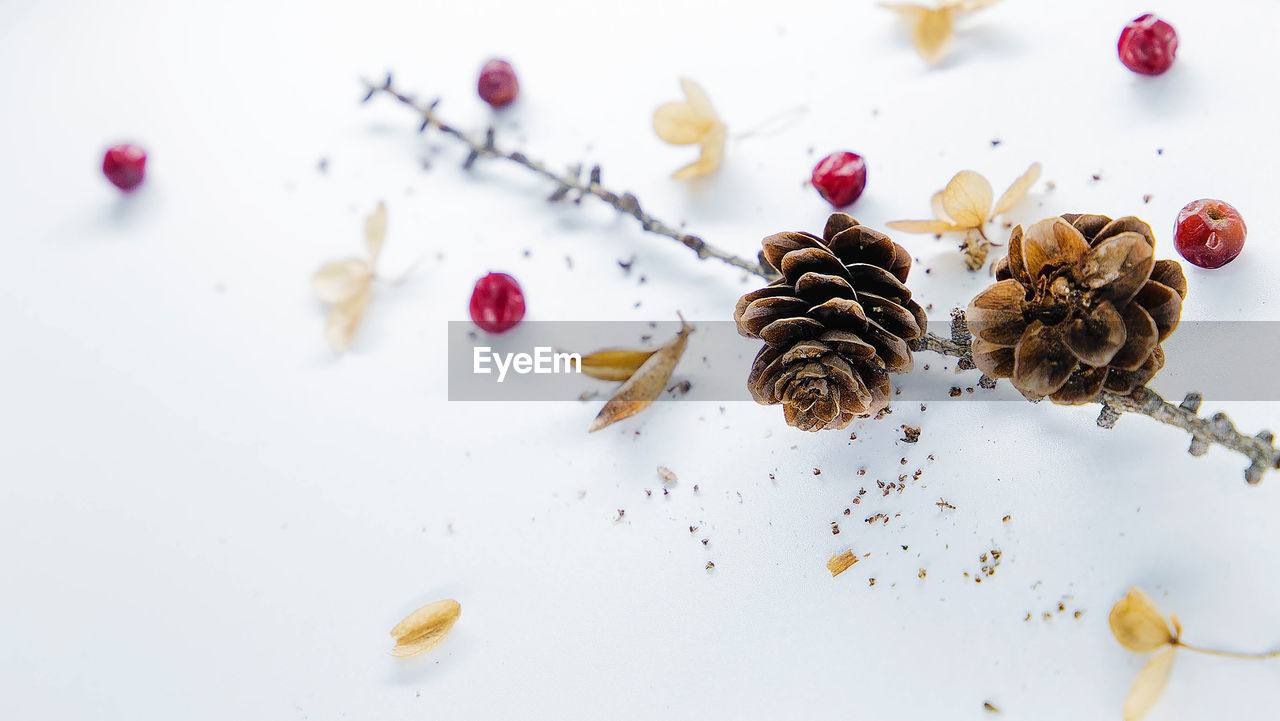 food and drink, food, indoors, close-up, freshness, no people, still life, flower, high angle view, table, nut - food, nut, plant, flowering plant, studio shot, healthy eating, spice, beauty in nature, dried food, fruit, temptation