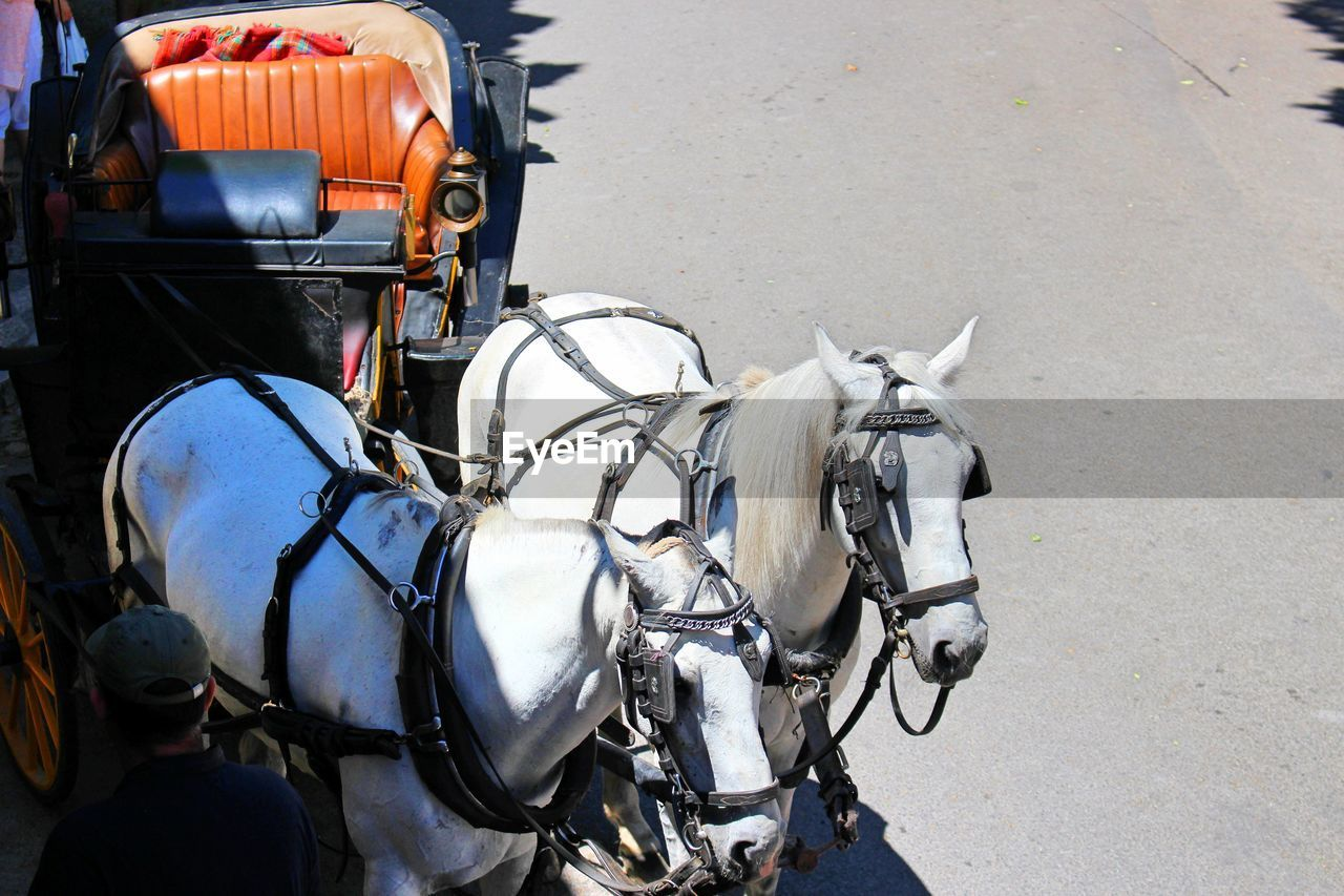 High angle view of horse carriage on street