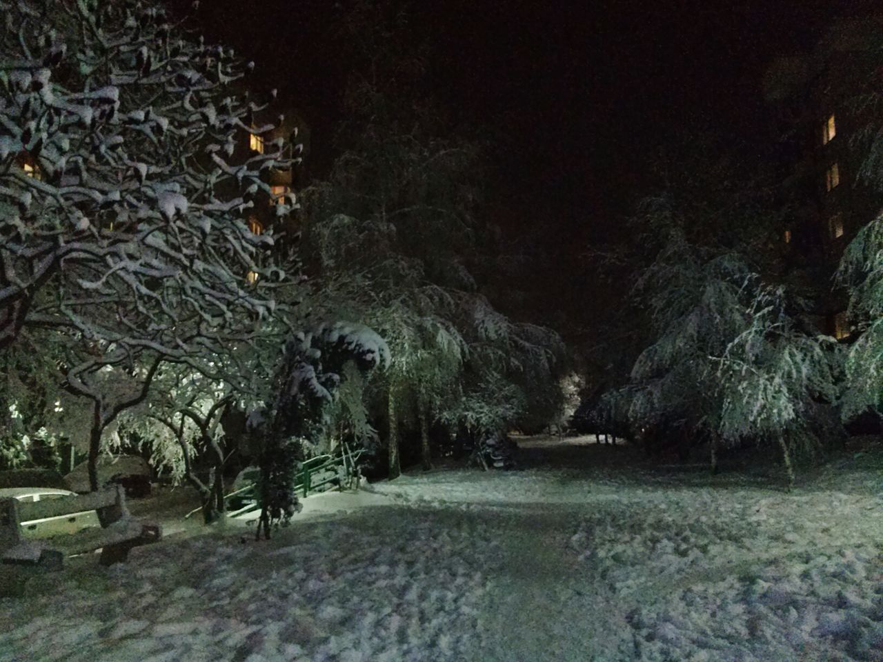 tree, nature, night, winter, cold temperature, the way forward, tranquility, snow, no people, landscape, growth, outdoors, beauty in nature, branch, scenics, forest, bare tree, illuminated