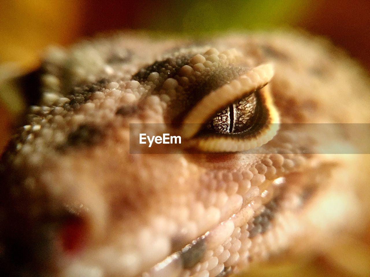 Macro shot of lizard