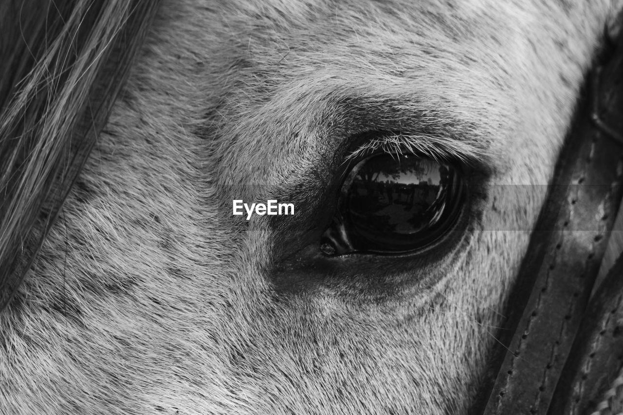 PORTRAIT OF A HORSE EYE