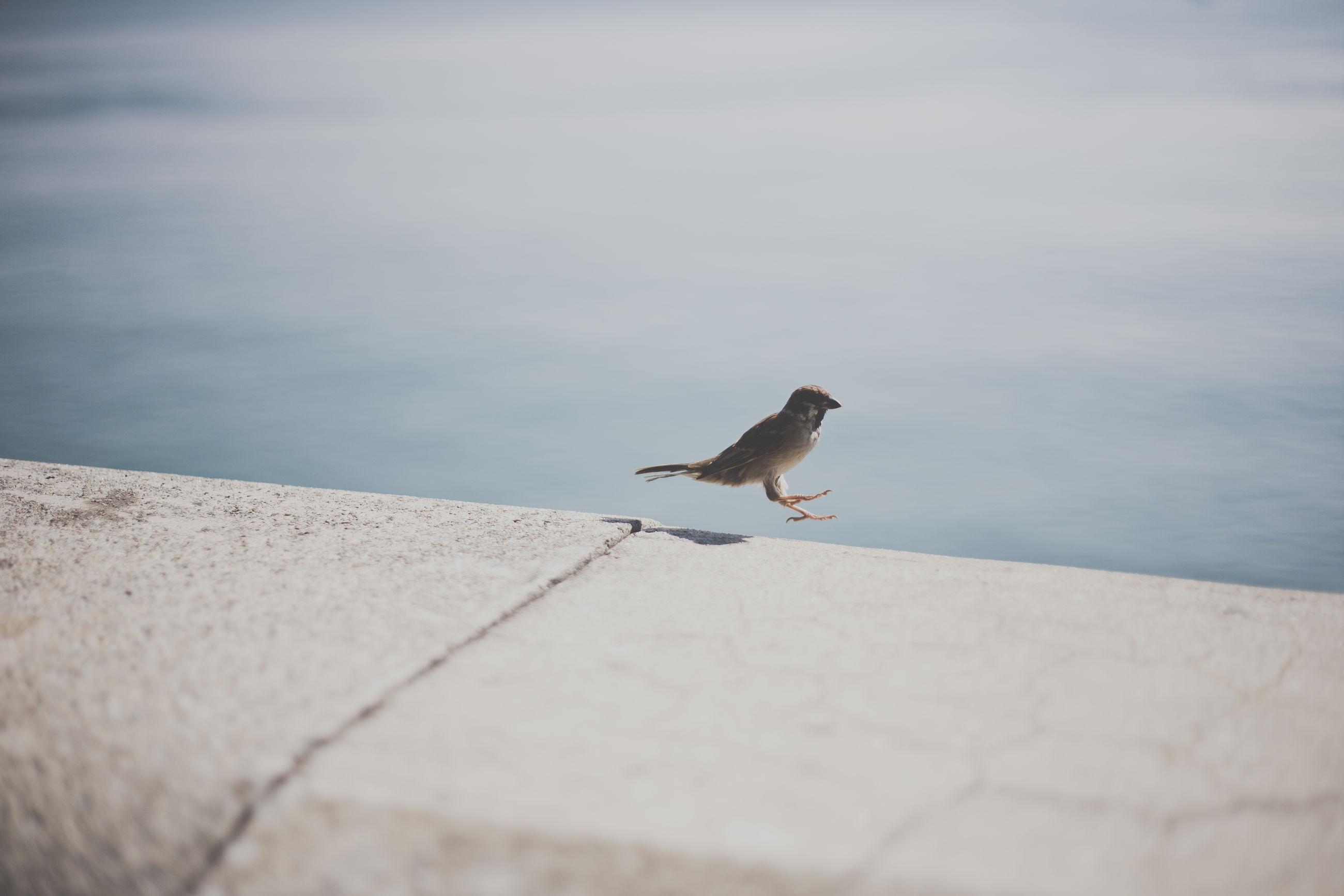 Side view of bird landing on concrete railing
