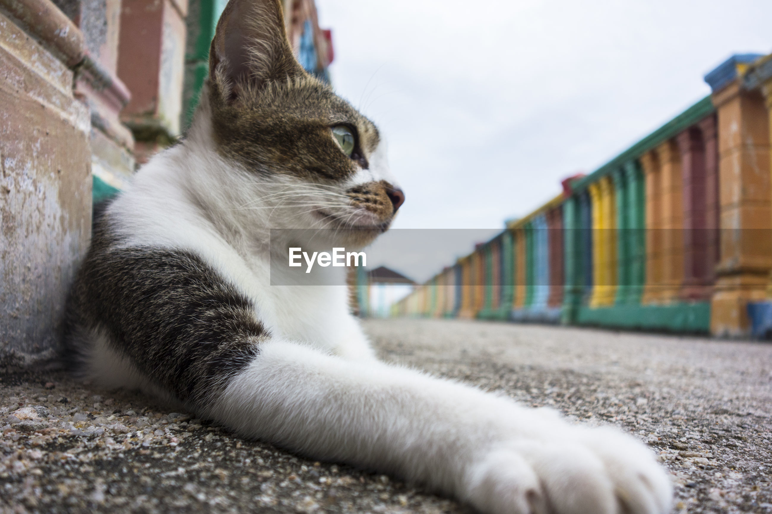 Close-up of stray cat resting on street against sky