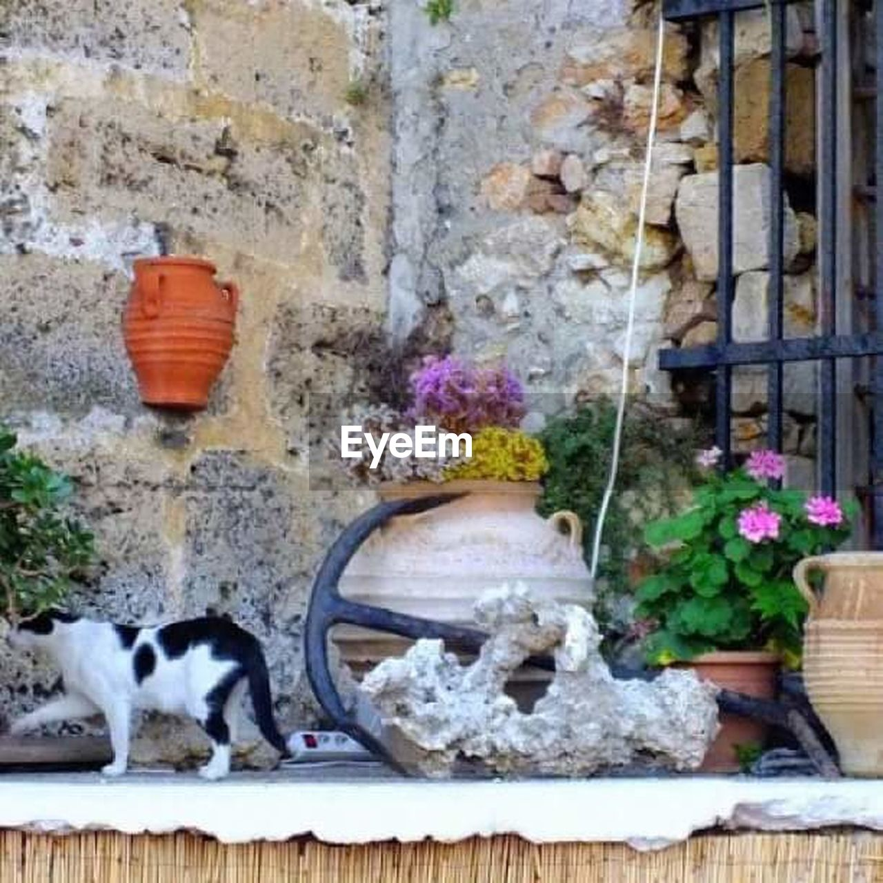 pets, domestic animals, one animal, animal themes, domestic cat, no people, day, mammal, flower, built structure, dog, outdoors, feline, architecture, building exterior