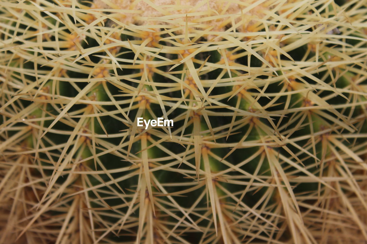 cactus, growth, full frame, backgrounds, thorn, green color, no people, close-up, plant, day, nature, outdoors