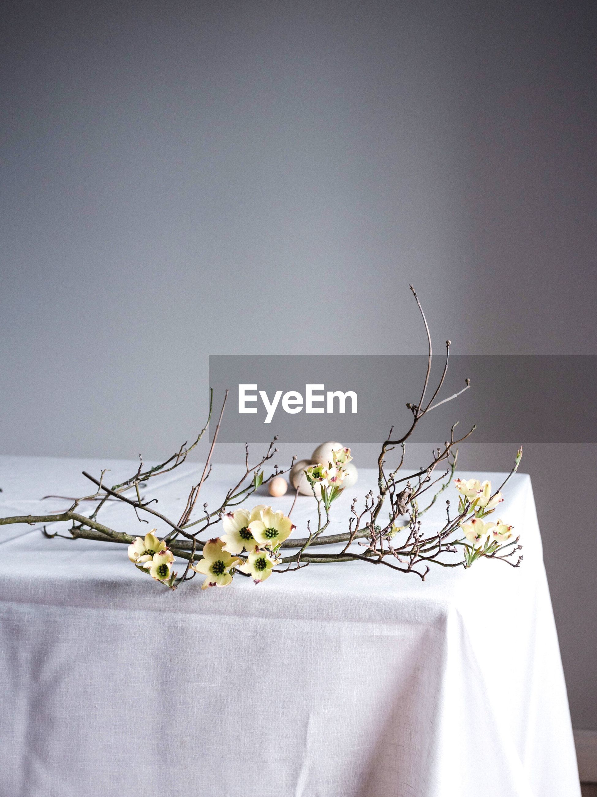 Close-up of white flowers on table against wall