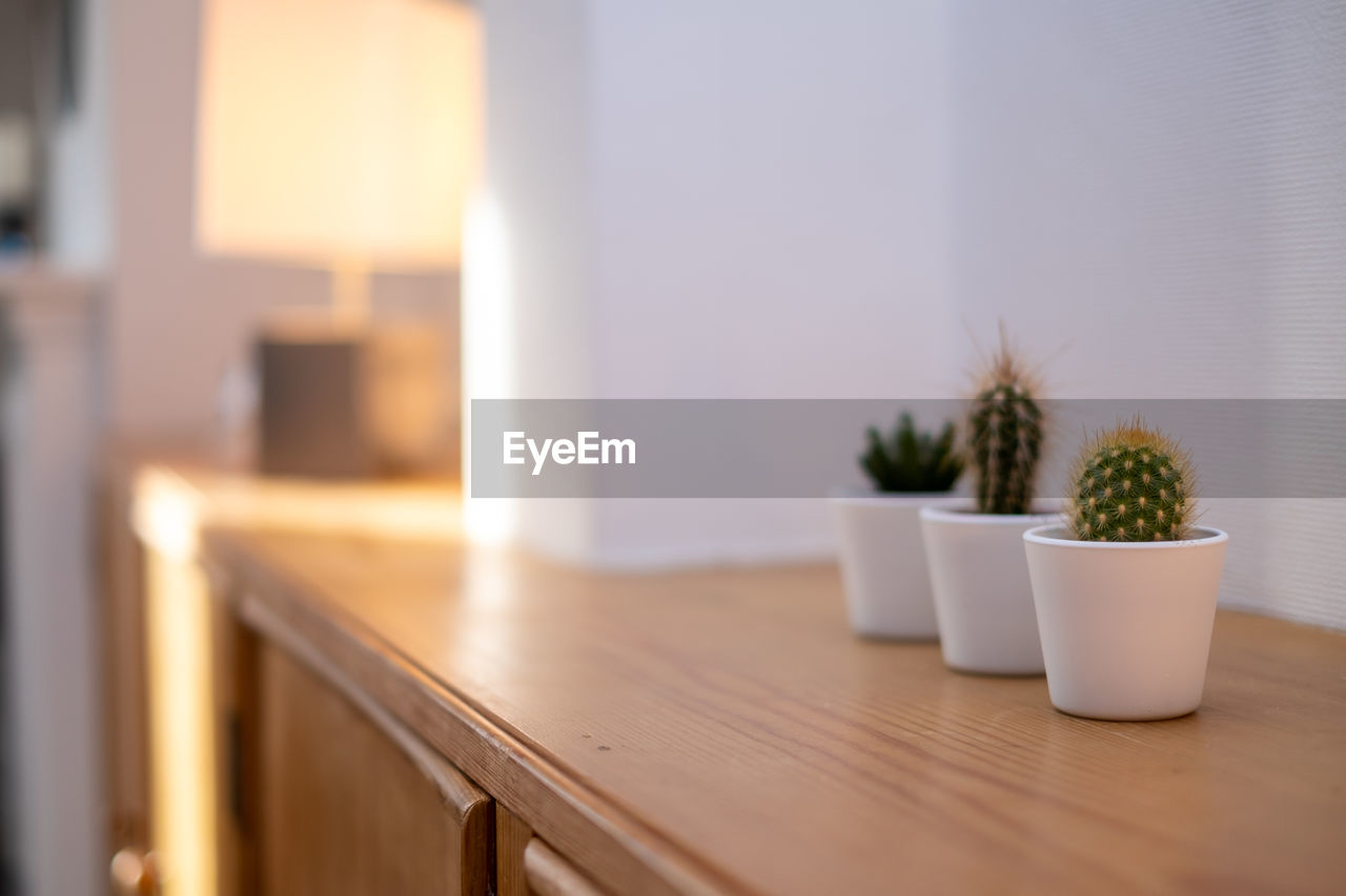 Close-up of potted cactus plants on table at home