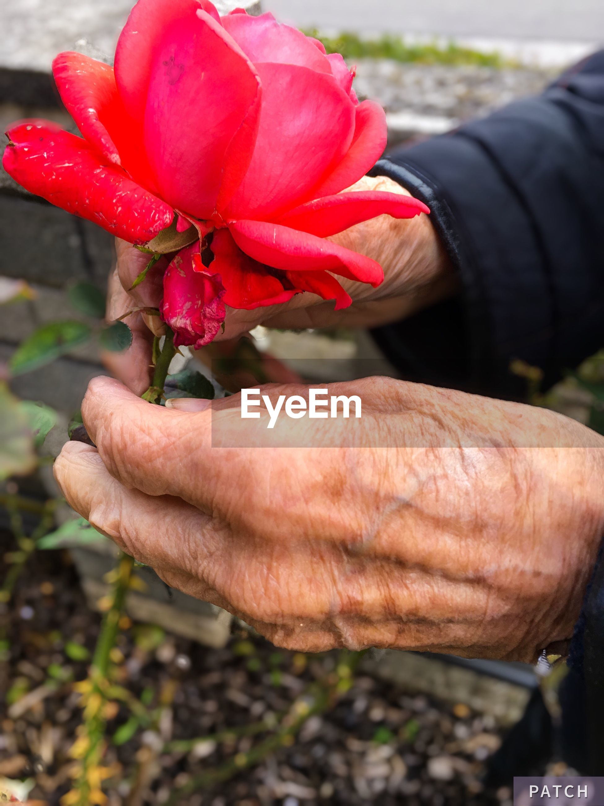 one person, real people, flower, fragility, human body part, human hand, outdoors, day, freshness, petal, close-up, nature, flower head, holding, lifestyles, growth, men, beauty in nature