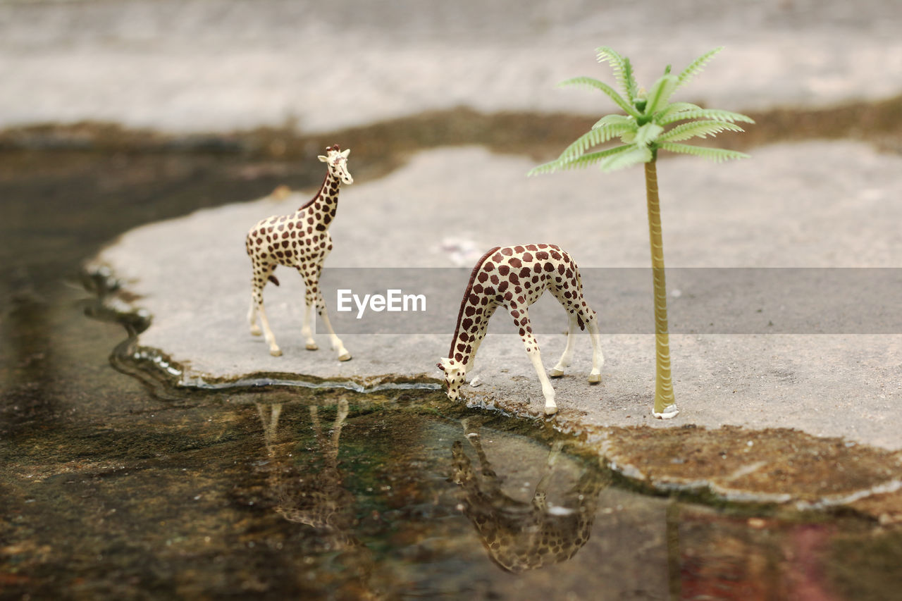 nature, animals in the wild, animal, no people, animal wildlife, animal themes, day, selective focus, water, group of animals, outdoors, reflection, plant, vertebrate, beauty in nature, plant part, two animals, lake, leaf, drinking