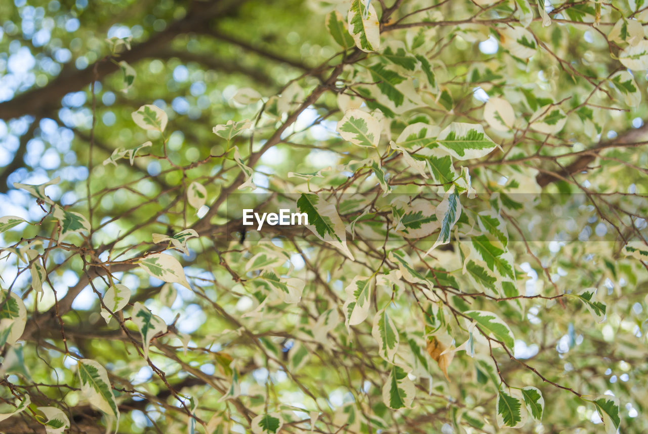 tree, branch, growth, nature, beauty in nature, no people, day, twig, low angle view, leaf, green color, outdoors, freshness, close-up