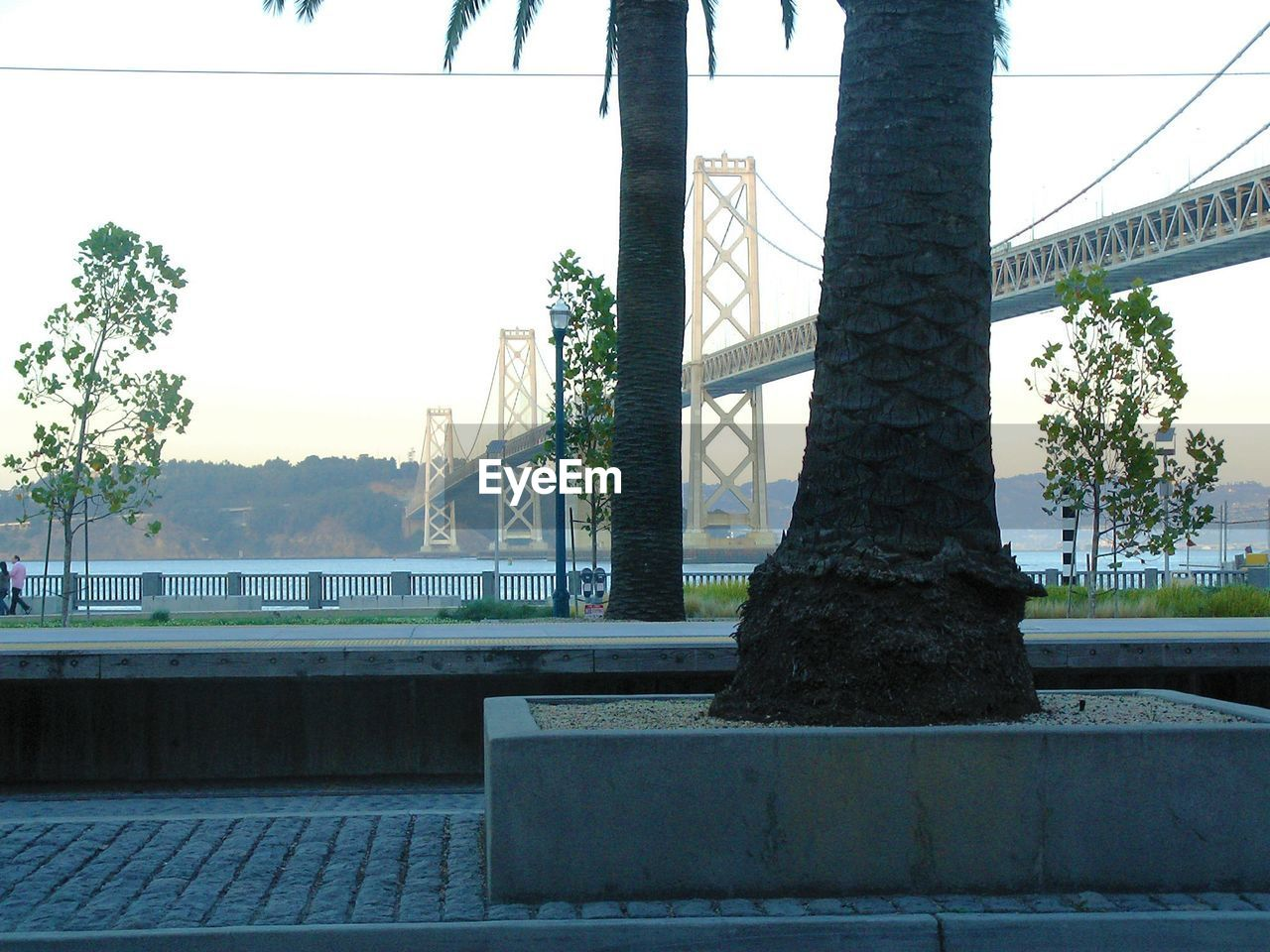 tree, architecture, built structure, day, bridge - man made structure, outdoors, no people, building exterior, sky, city, nature