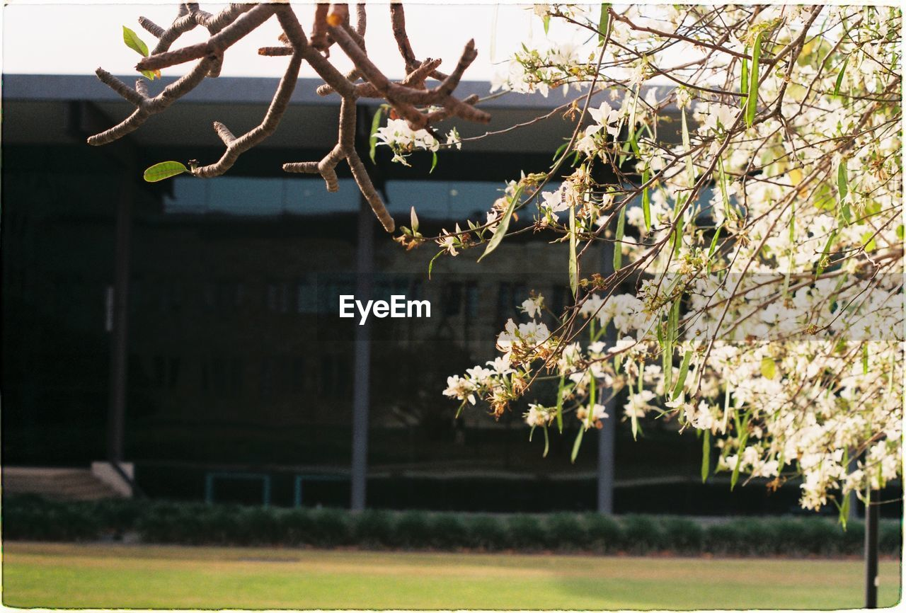 plant, tree, growth, focus on foreground, branch, flower, flowering plant, day, freshness, beauty in nature, nature, architecture, no people, built structure, building exterior, fragility, outdoors, field, blossom, sunlight, springtime, cherry blossom