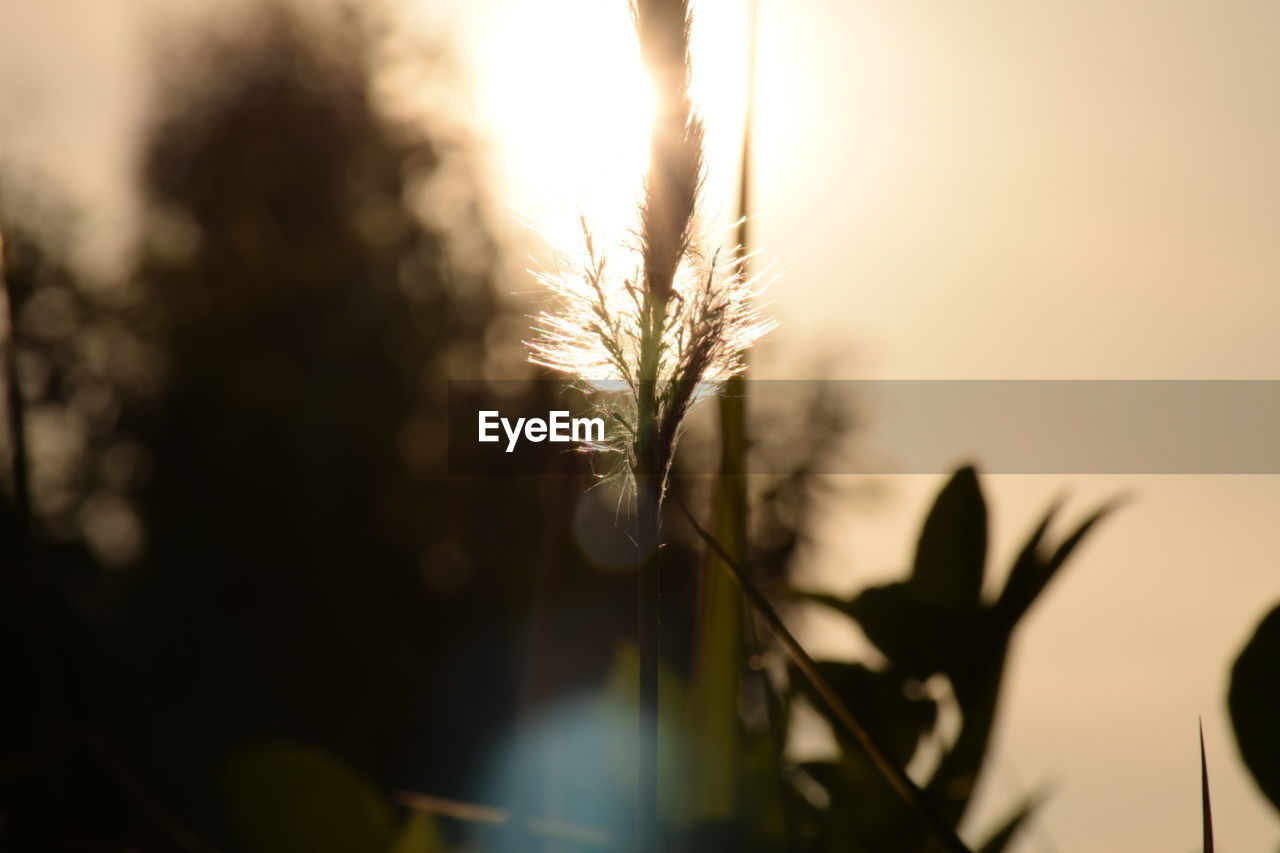 nature, growth, close-up, selective focus, sun, plant, focus on foreground, beauty in nature, no people, sunset, sunlight, flower, outdoors, fragility, day, sky, freshness