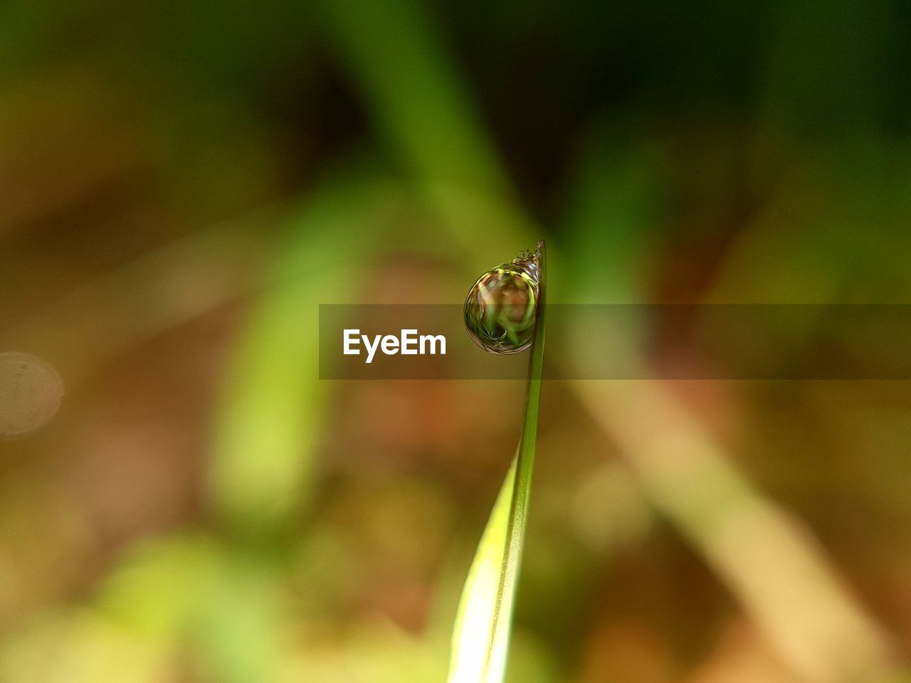 close-up, plant, green color, beauty in nature, animals in the wild, growth, day, animal themes, one animal, focus on foreground, animal, animal wildlife, invertebrate, selective focus, nature, no people, insect, fragility, outdoors, vulnerability, blade of grass, purity