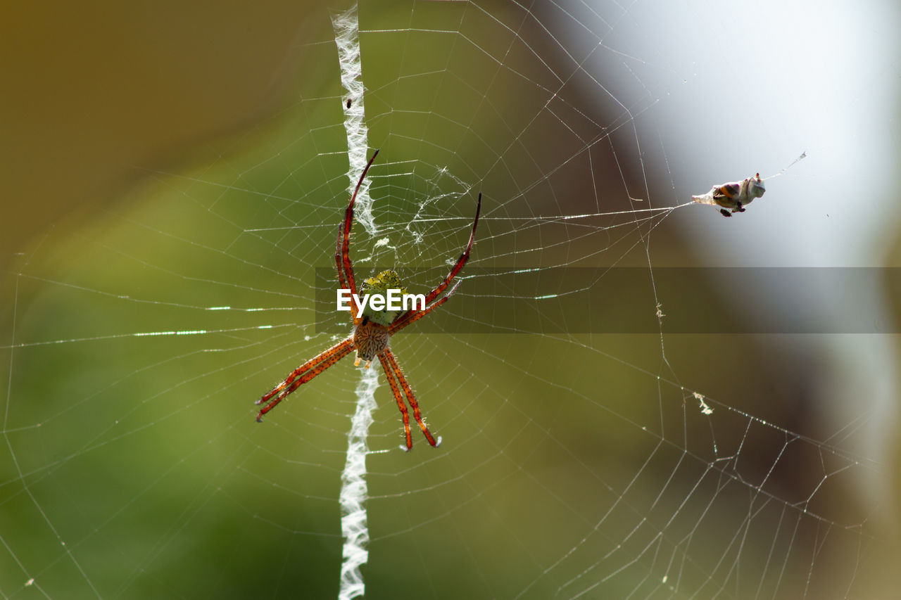 spider web, animal themes, animals in the wild, invertebrate, animal, insect, animal wildlife, close-up, fragility, spider, arachnid, one animal, arthropod, focus on foreground, survival, day, nature, vulnerability, web, no people, outdoors, animal leg, complexity