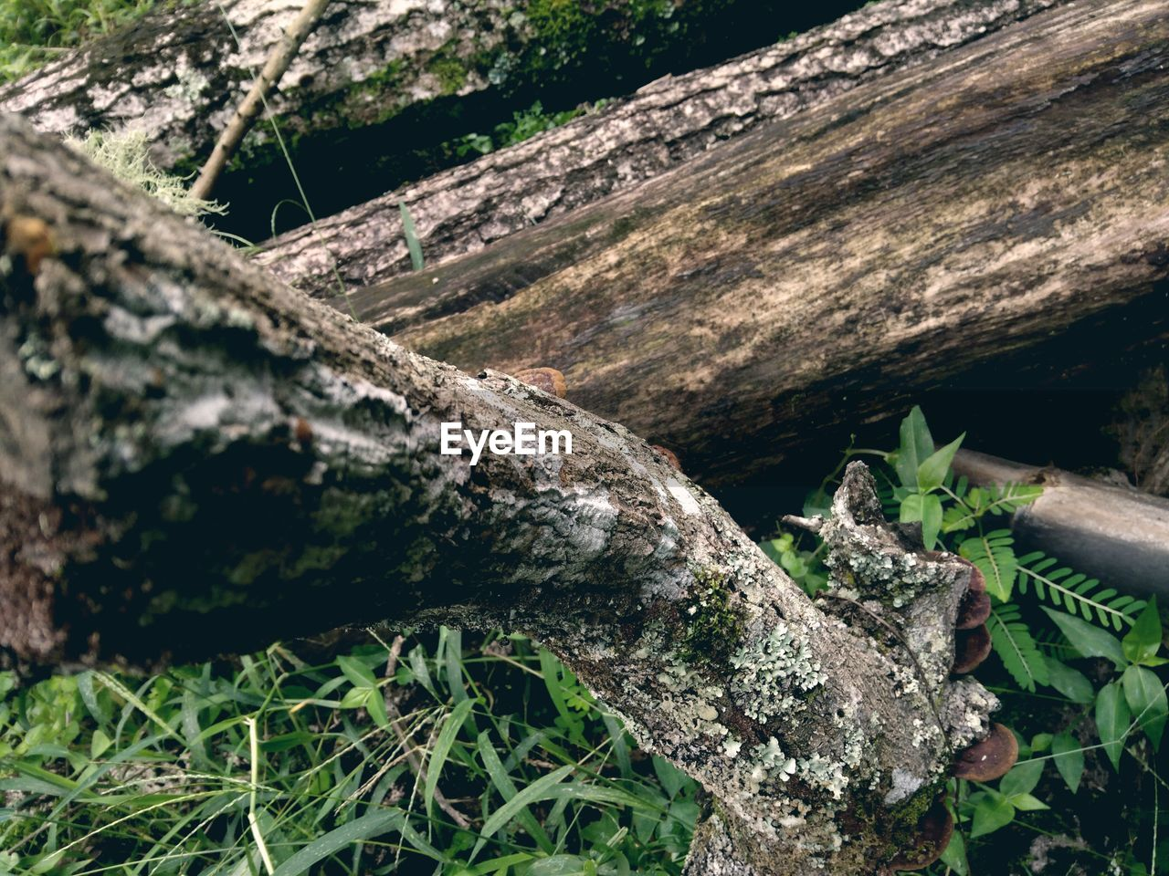 day, no people, outdoors, nature, wood - material, log, close-up, textured, tree trunk, tree