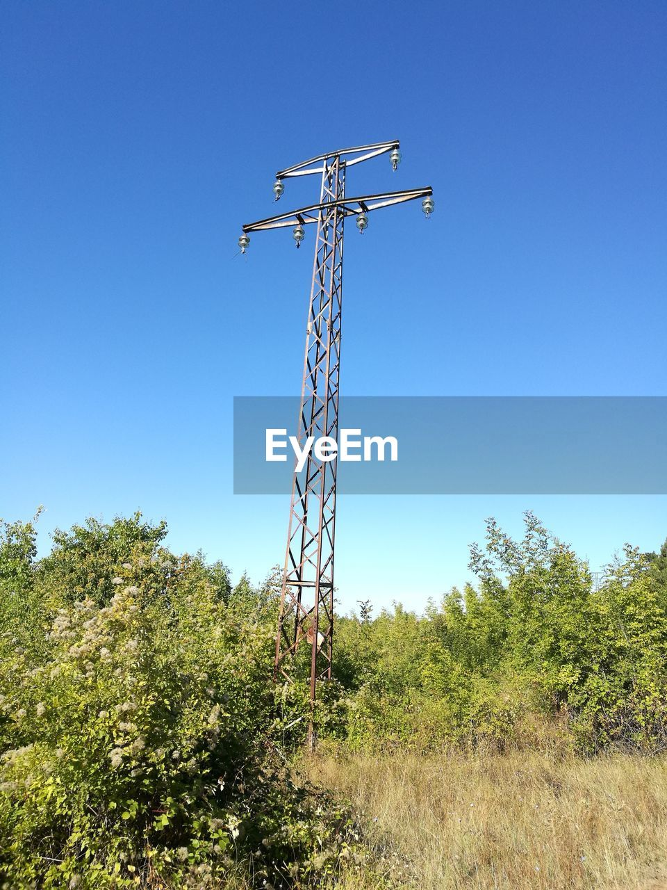 sky, plant, clear sky, low angle view, nature, blue, tree, day, no people, sunlight, land, growth, outdoors, field, green color, technology, copy space, tall - high, metal, connection