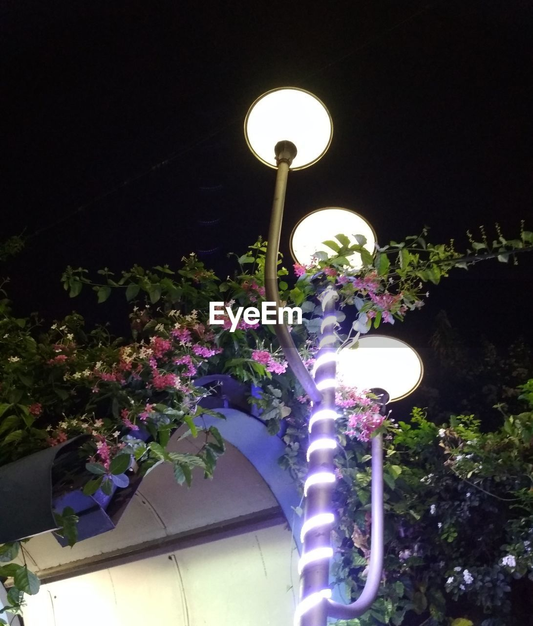 lighting equipment, flower, illuminated, low angle view, night, no people, plant, growth, nature, outdoors, tree, beauty in nature, fragility, architecture, clear sky, freshness