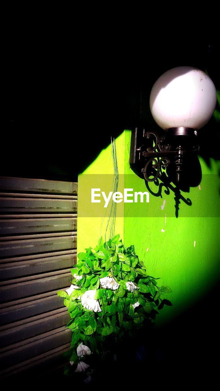 no people, green color, close-up, leaf, indoors, fragility, day, nature, black background, freshness