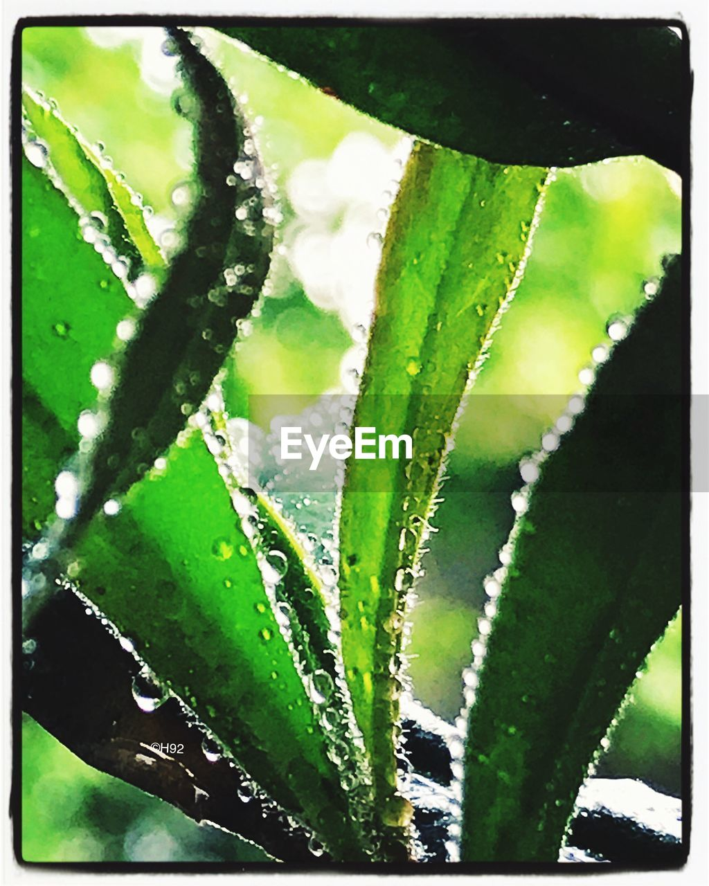 green color, drop, leaf, nature, water, plant, close-up, growth, aloe vera plant, freshness, aloe, no people, day, wet, beauty in nature, outdoors