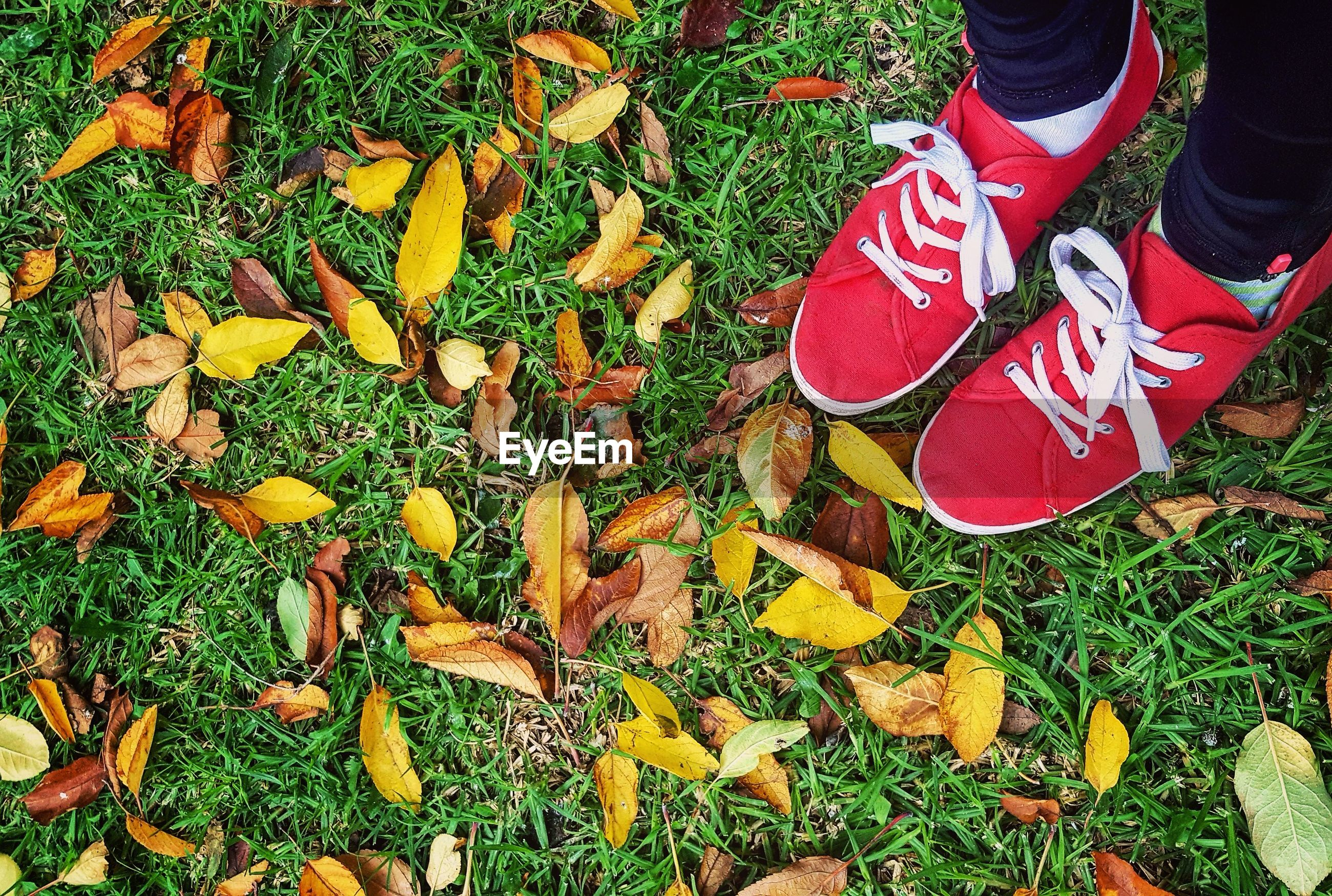 Low section of person wearing shoes while standing on grassy field during autumn