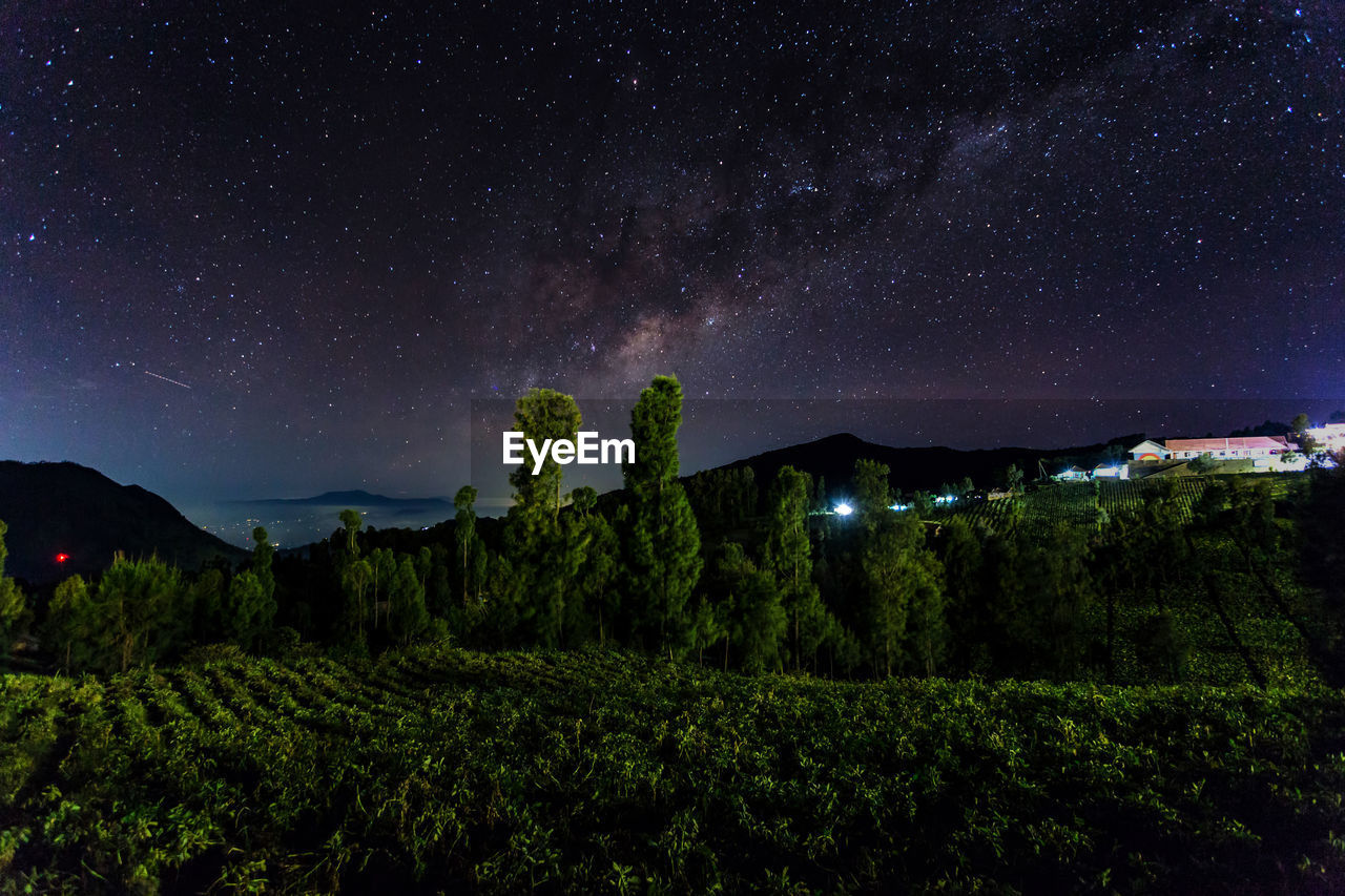 Scenic View Of Trees Against Sky At Night