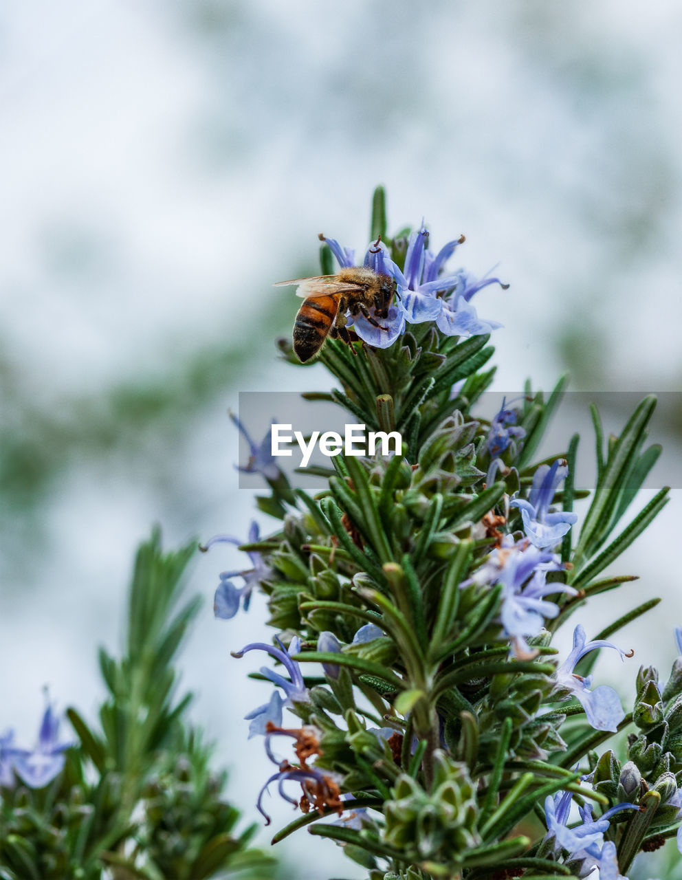 plant, flowering plant, flower, invertebrate, growth, beauty in nature, insect, vulnerability, fragility, animal themes, animal wildlife, animal, close-up, one animal, nature, animals in the wild, no people, flower head, freshness, bee, purple, pollination, animal wing, butterfly - insect