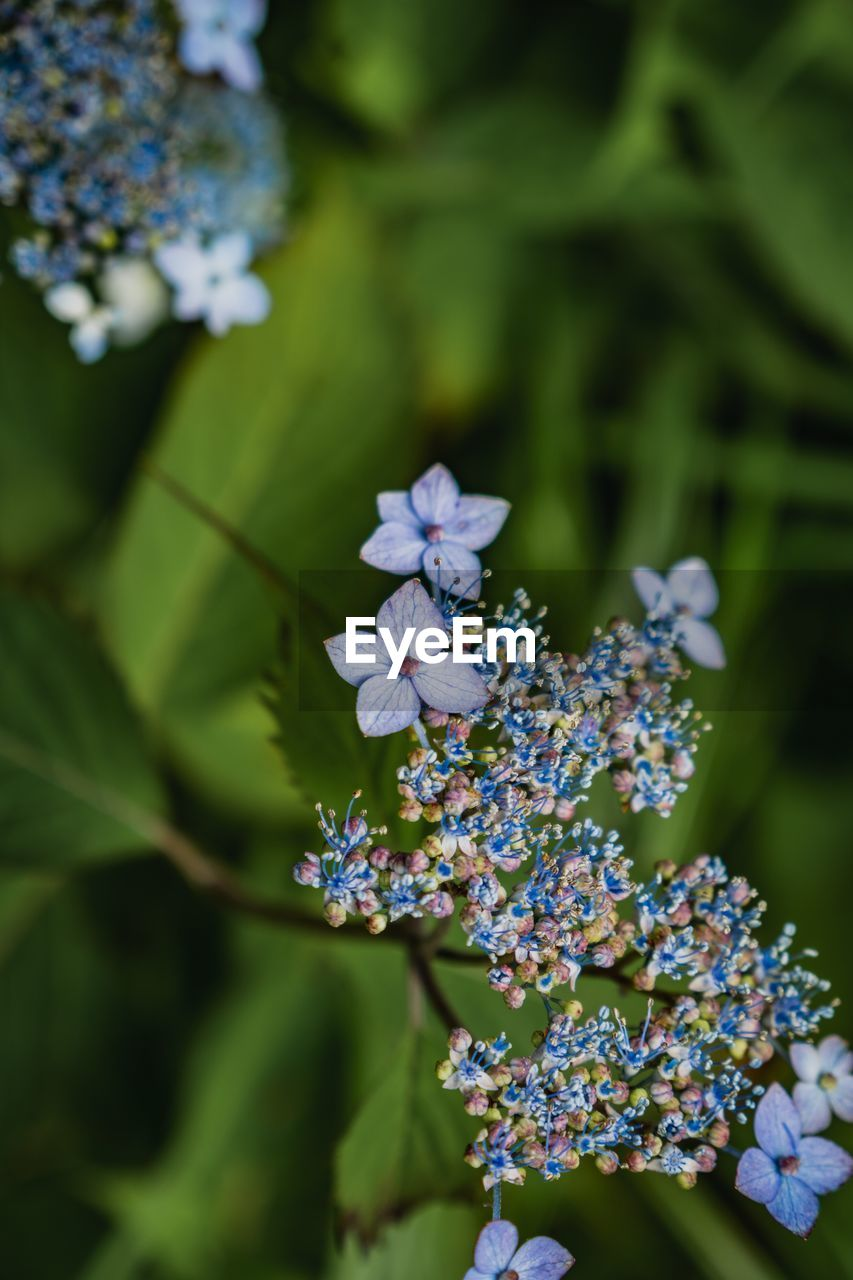 flowering plant, flower, plant, vulnerability, beauty in nature, growth, fragility, freshness, close-up, day, petal, selective focus, nature, flower head, no people, inflorescence, purple, white color, botany, focus on foreground, outdoors, lilac