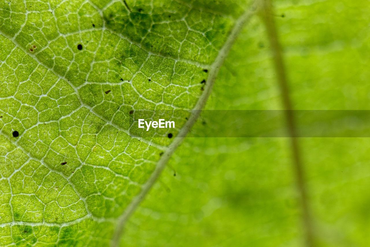 Holes in green leaf