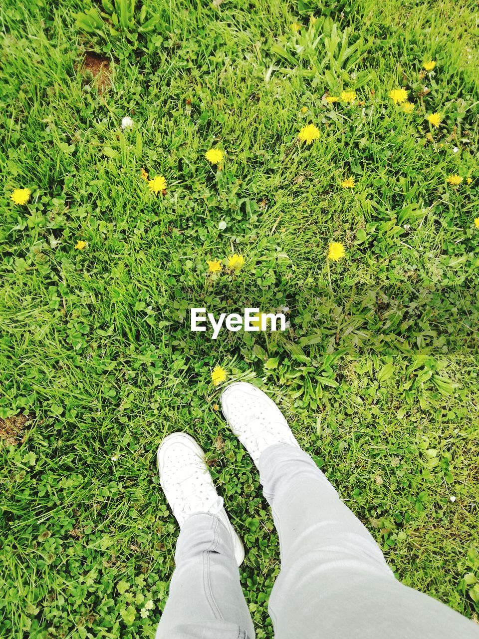 grass, shoe, low section, human leg, high angle view, green color, one person, standing, day, field, outdoors, real people, human body part, nature, flower, close-up, people