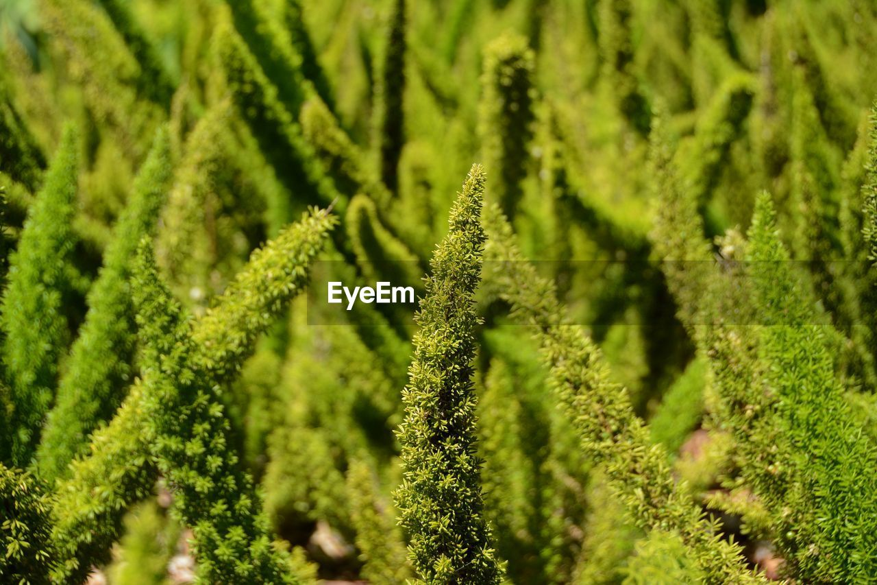 green color, growth, nature, plant, no people, day, close-up, beauty in nature, sunlight, fern, backgrounds, outdoors, freshness